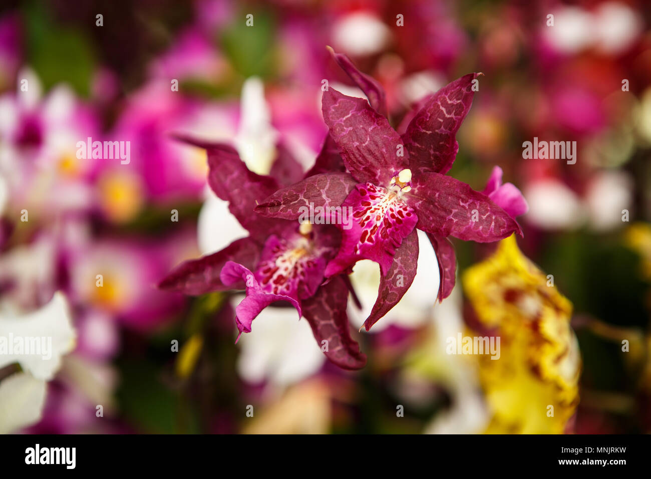 Field of pink lilies stock photos field of pink lilies stock beautiful colorful pink lilies flowers bloom in spring gardencorative wallpaper with red lilium flower izmirmasajfo