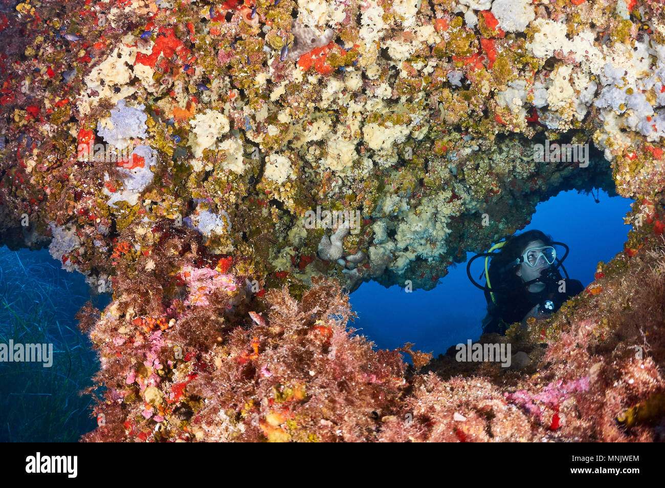 Female scuba diver framed in an underwater window of a colorful reef full of marine life at Ses Salines Natural Park(Formentera,Balearic Islands,Spain - Stock Image