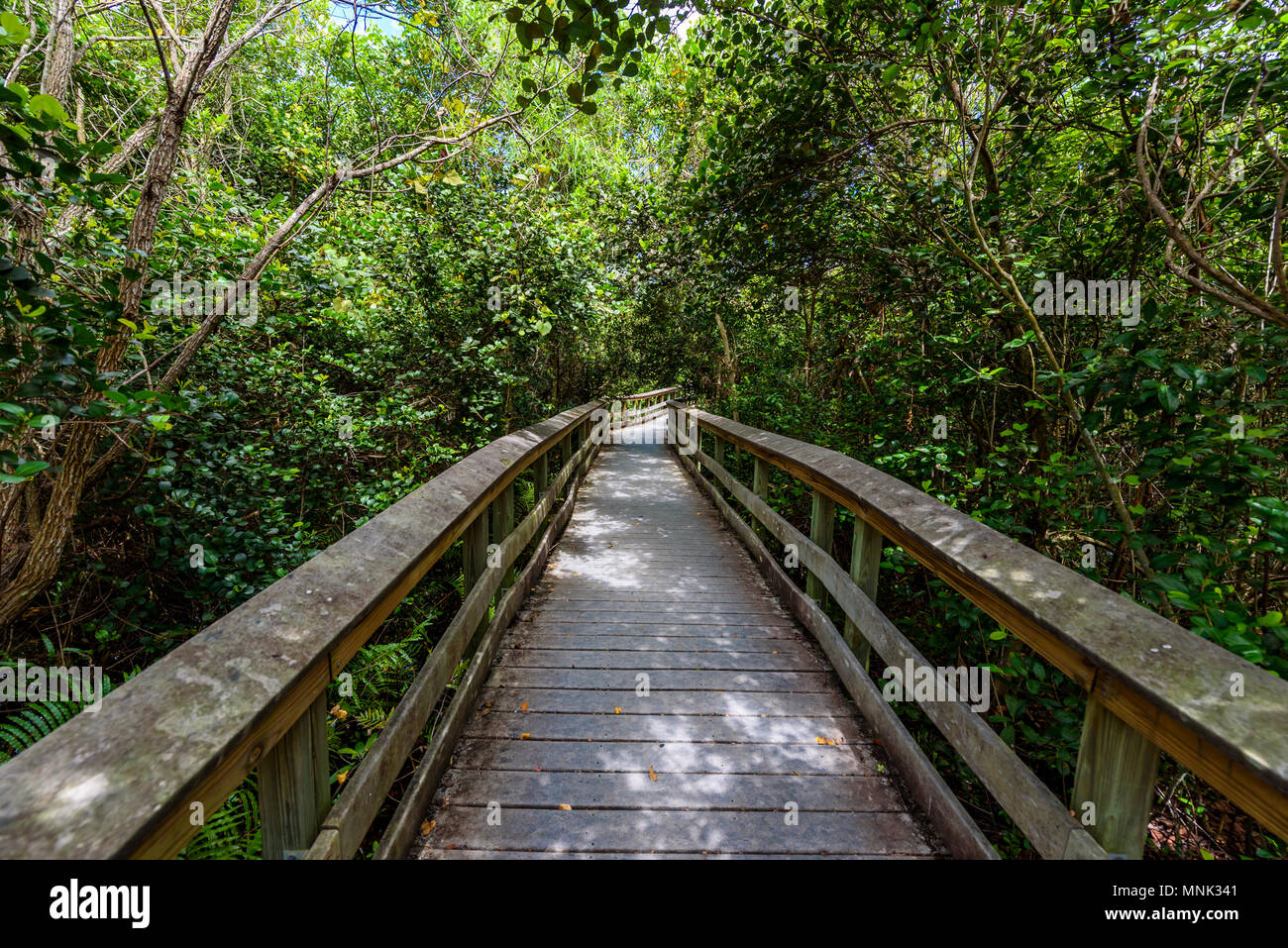 Gumbo Limbo Trail of the Everglades National Park. Boardwalks in the swamp. Florida, USA. - Stock Image