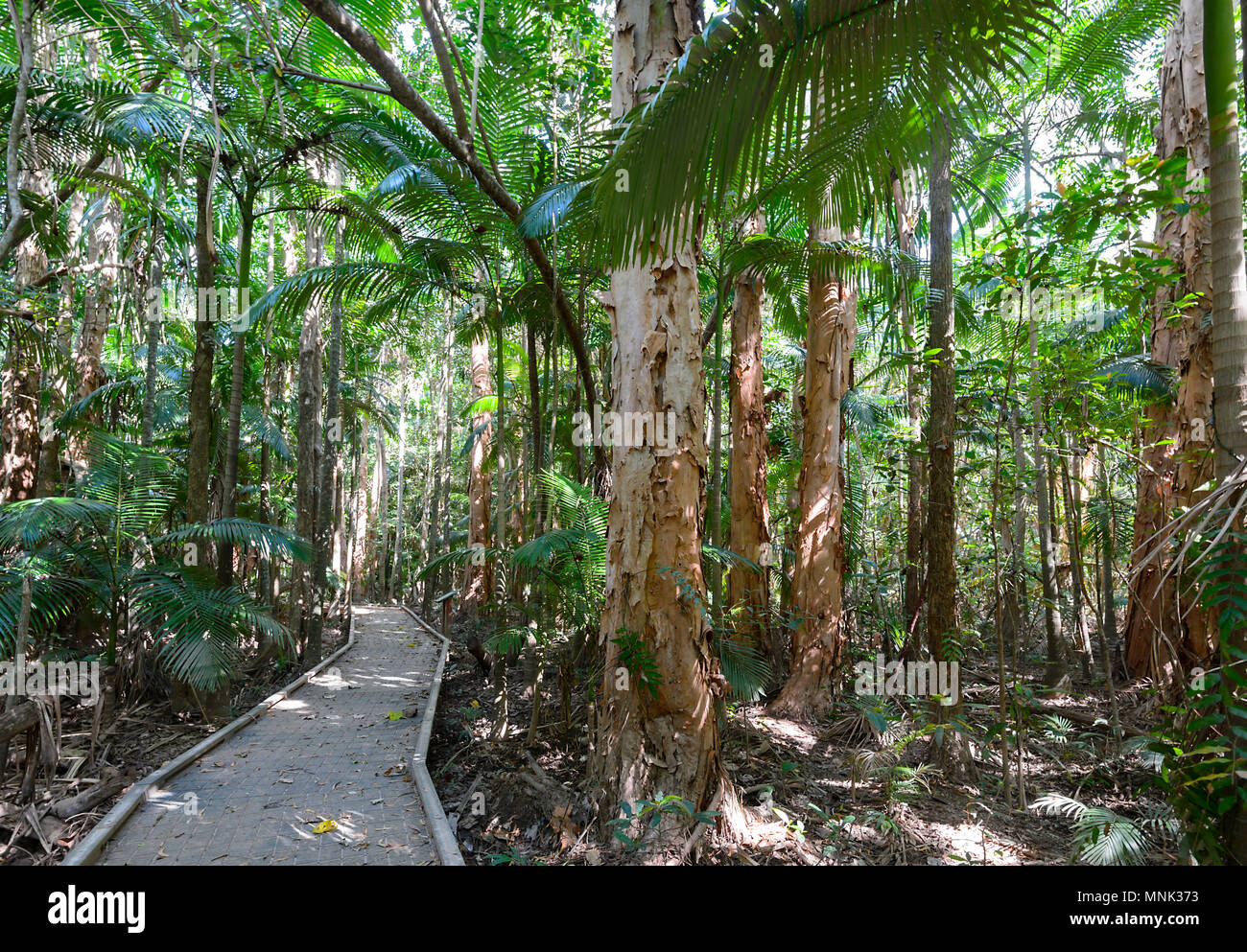 The Boardwalk at Cattana Wetlands, a rehabilitated nature conservation park in Smithfield, near Cairns, Far North Queensland, FNQ, QLD, Australia - Stock Image