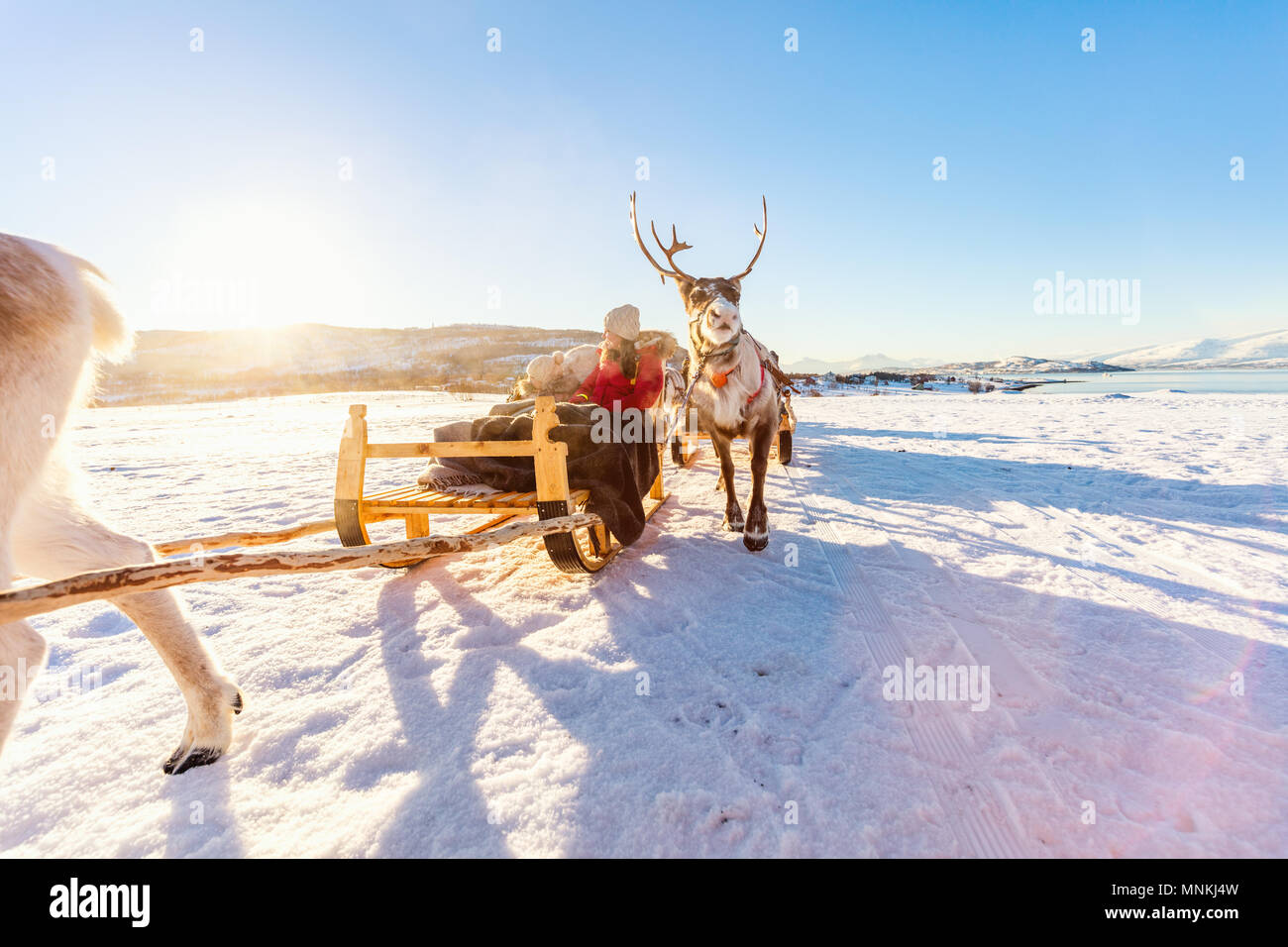 Family of mother and her daughter at reindeer safari on sunny winter day in Northern Norway - Stock Image