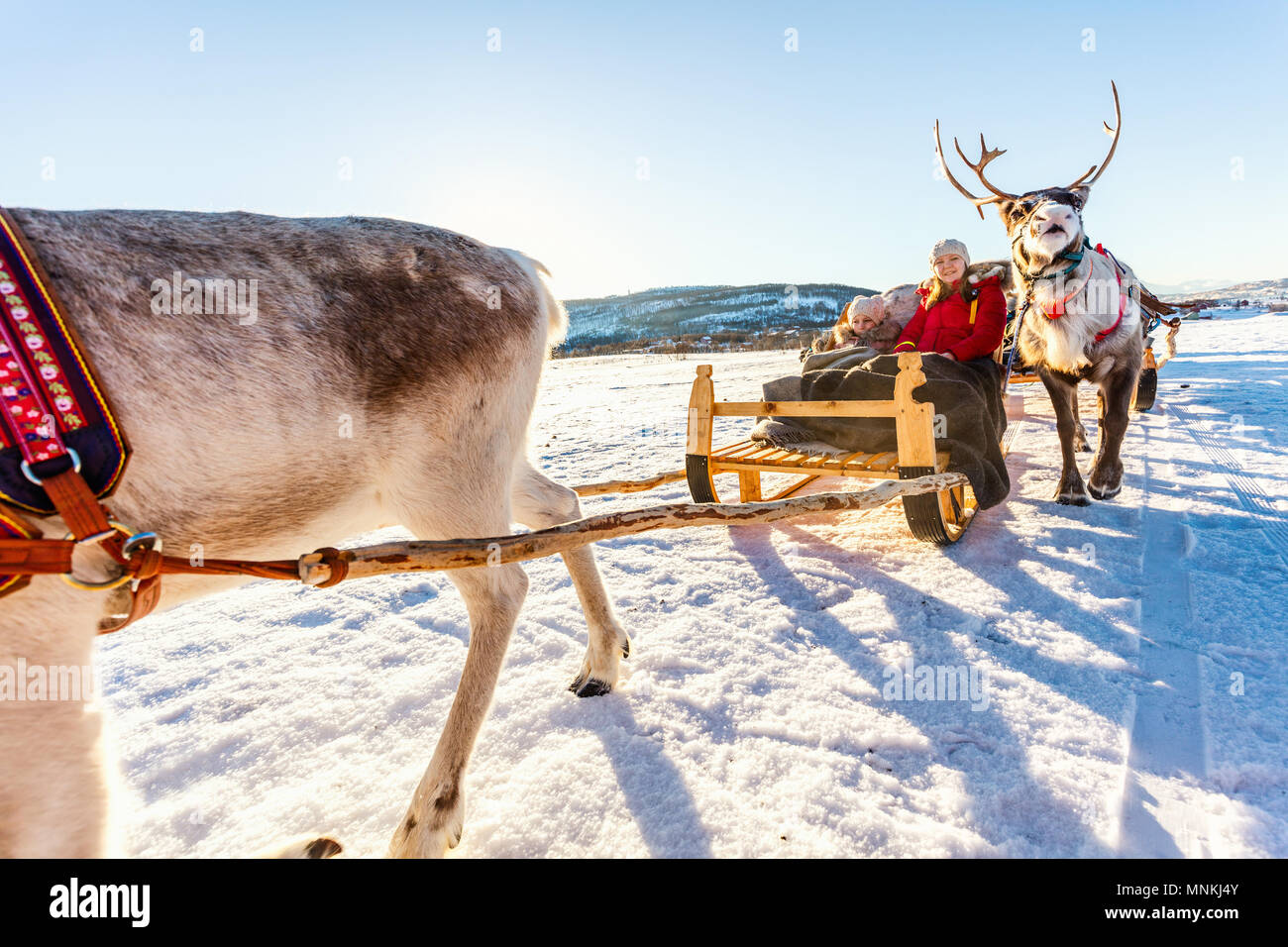 Family of mother and her daughter at reindeer safari on sunny winter day in Northern Norway Stock Photo
