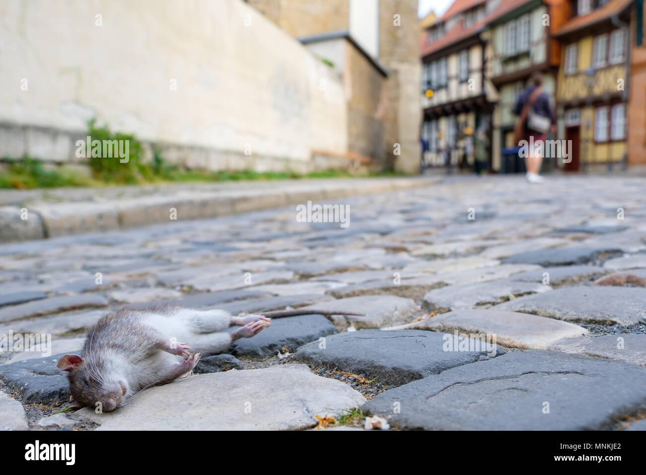 historische Altstadt von Quedlinburg Harz Stock Photo