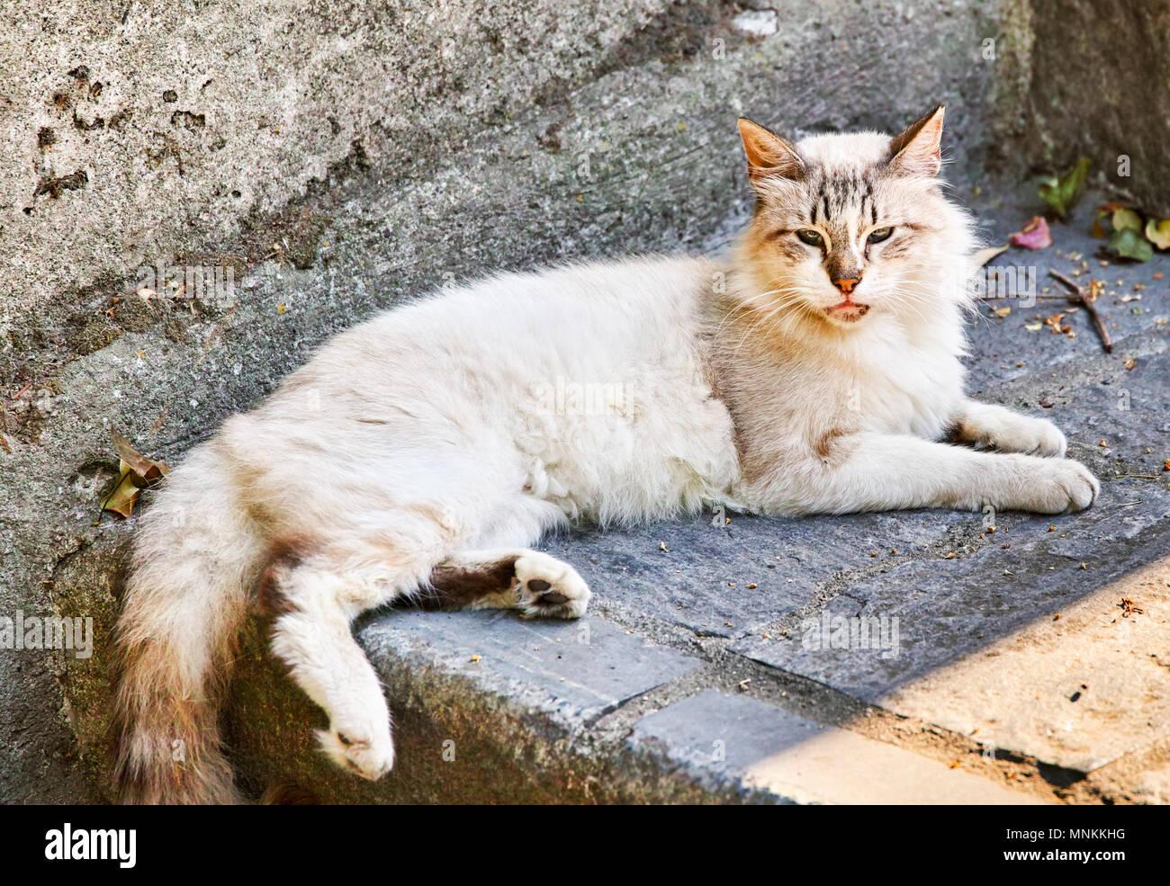 Cats World - Stock Image