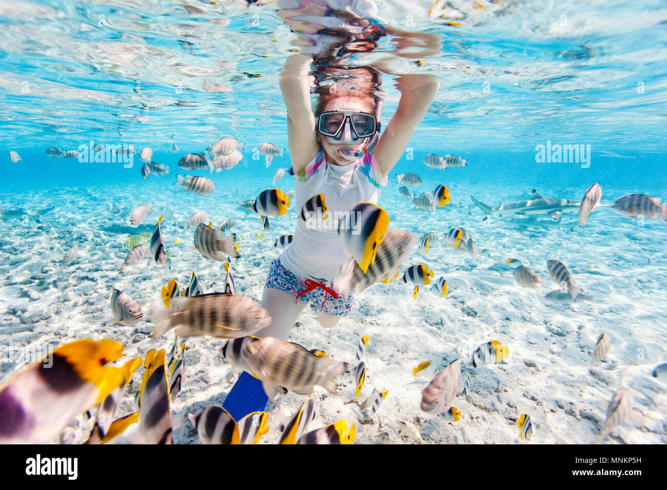 Woman snorkeling in clear tropical waters among colorful fish - Stock Image