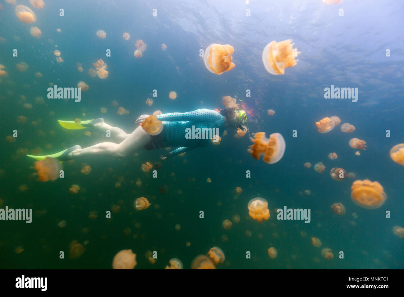 Underwater photo of tourist woman snorkeling with endemic golden jellyfish in lake at Palau Stock Photo