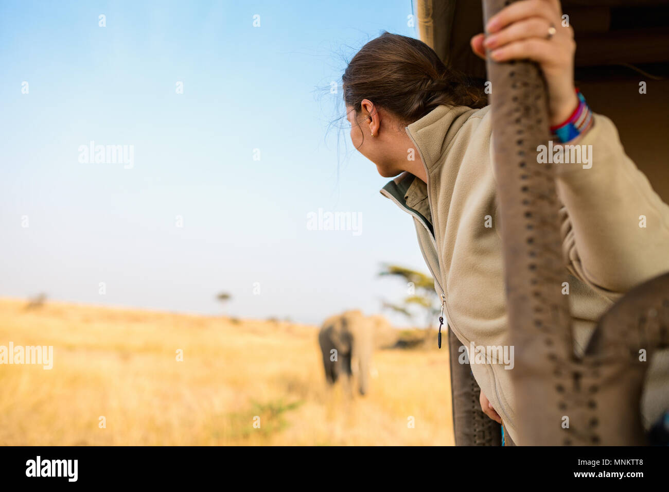 Woman on safari game drive enjoying close encounter with elephants in Kenya Africa - Stock Image