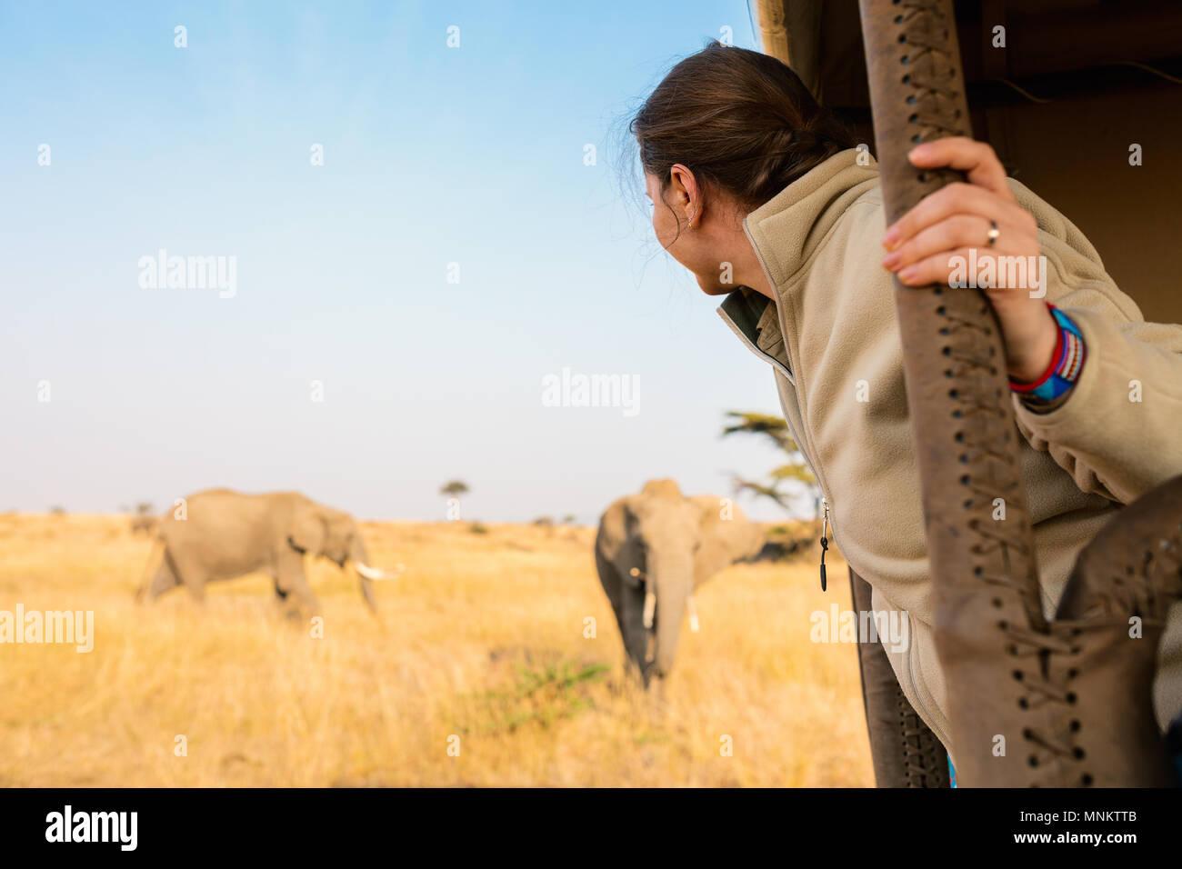 Woman on safari game drive enjoying close encounter with elephants in Kenya Africa - Stock Image