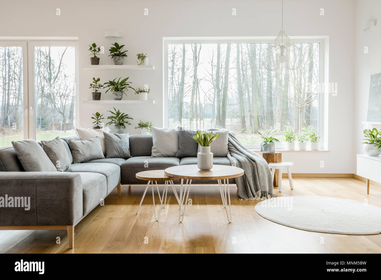 . Plants on shelves next to a window in natural living room interior