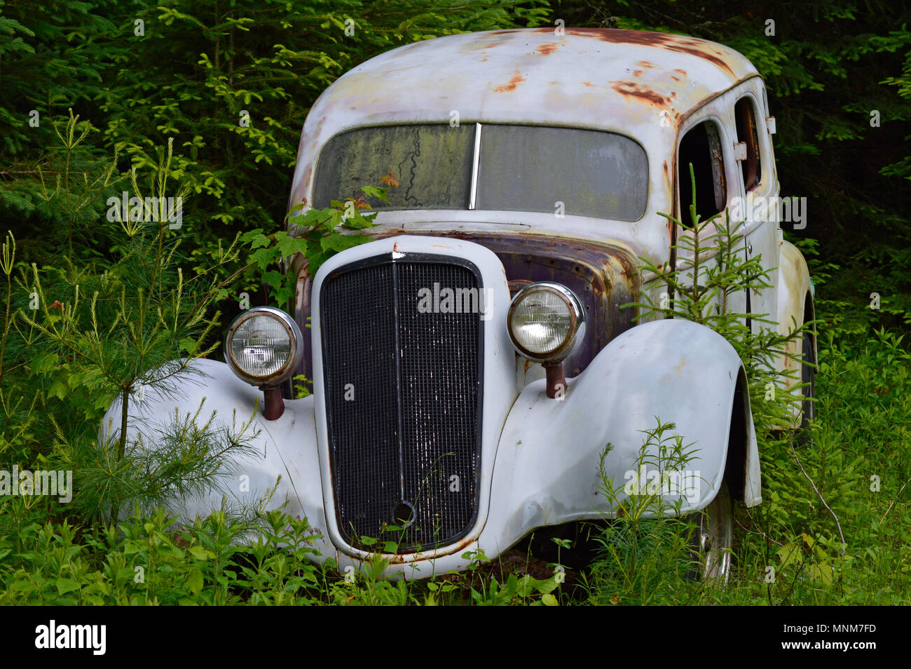 Old Mercedes circa 1940, abandoned in a field near a large forest - Stock Image