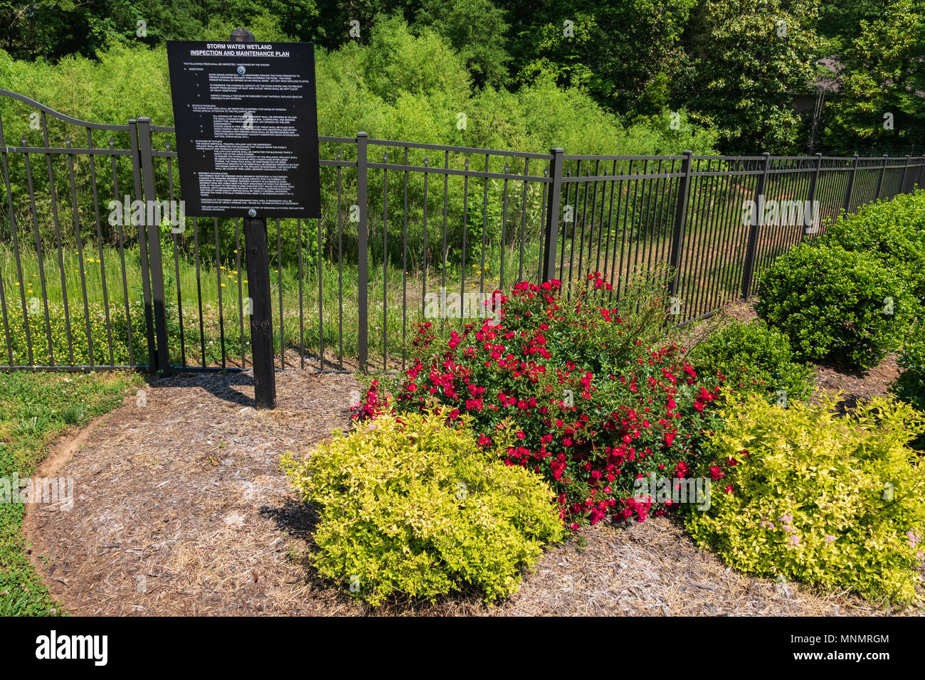 A rain garden of cane, fenced in with Azaleas and other attractive shrubbery surrounding it. - Stock Image