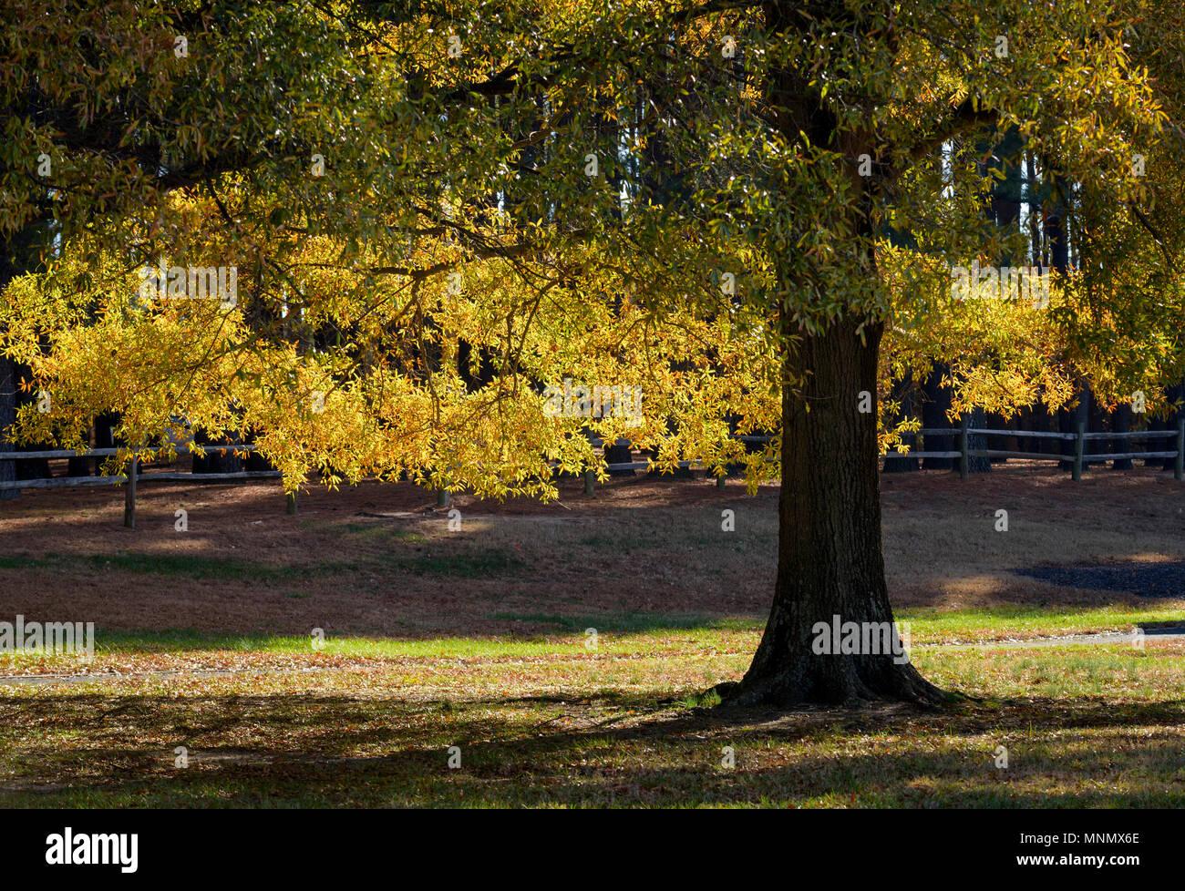 fall scenery in tuckahoe state park ridgely maryland stock photo