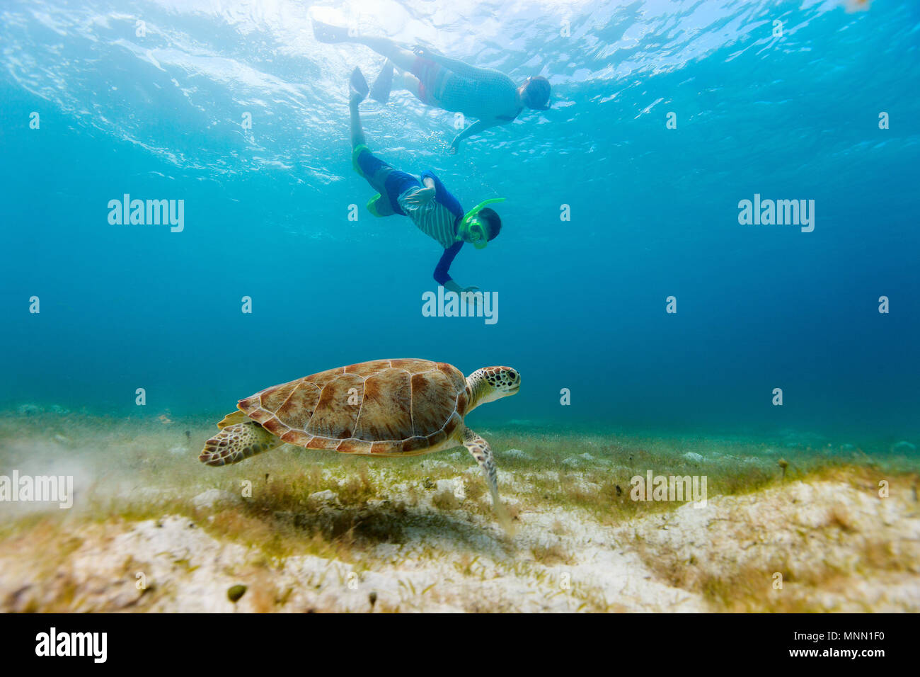 Underwater photo of family mother and son snorkeling and swimming with Hawksbill sea turtle - Stock Image