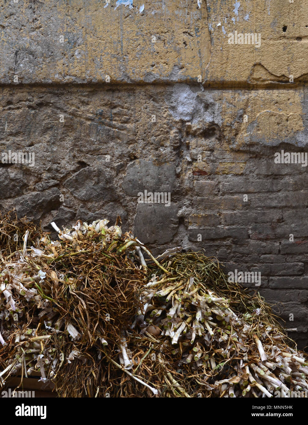 Fresh leeks piled high against an old stone wall in a Palermo market in Sicily - Stock Image