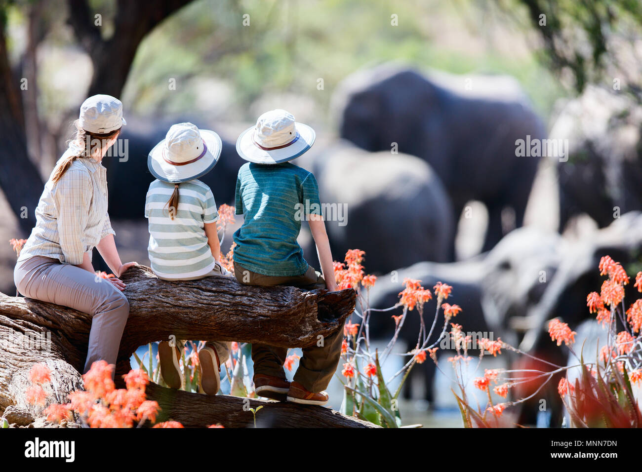 Family of mother and kids on African safari vacation enjoying wildlife viewing at watering hole - Stock Image