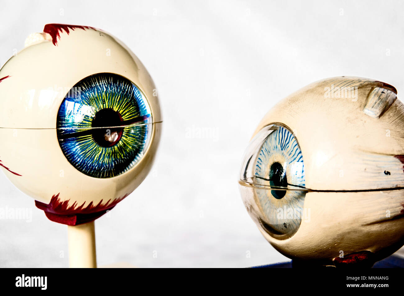 anatomical model: eyes, anatomisches model: augen Stock Photo ...