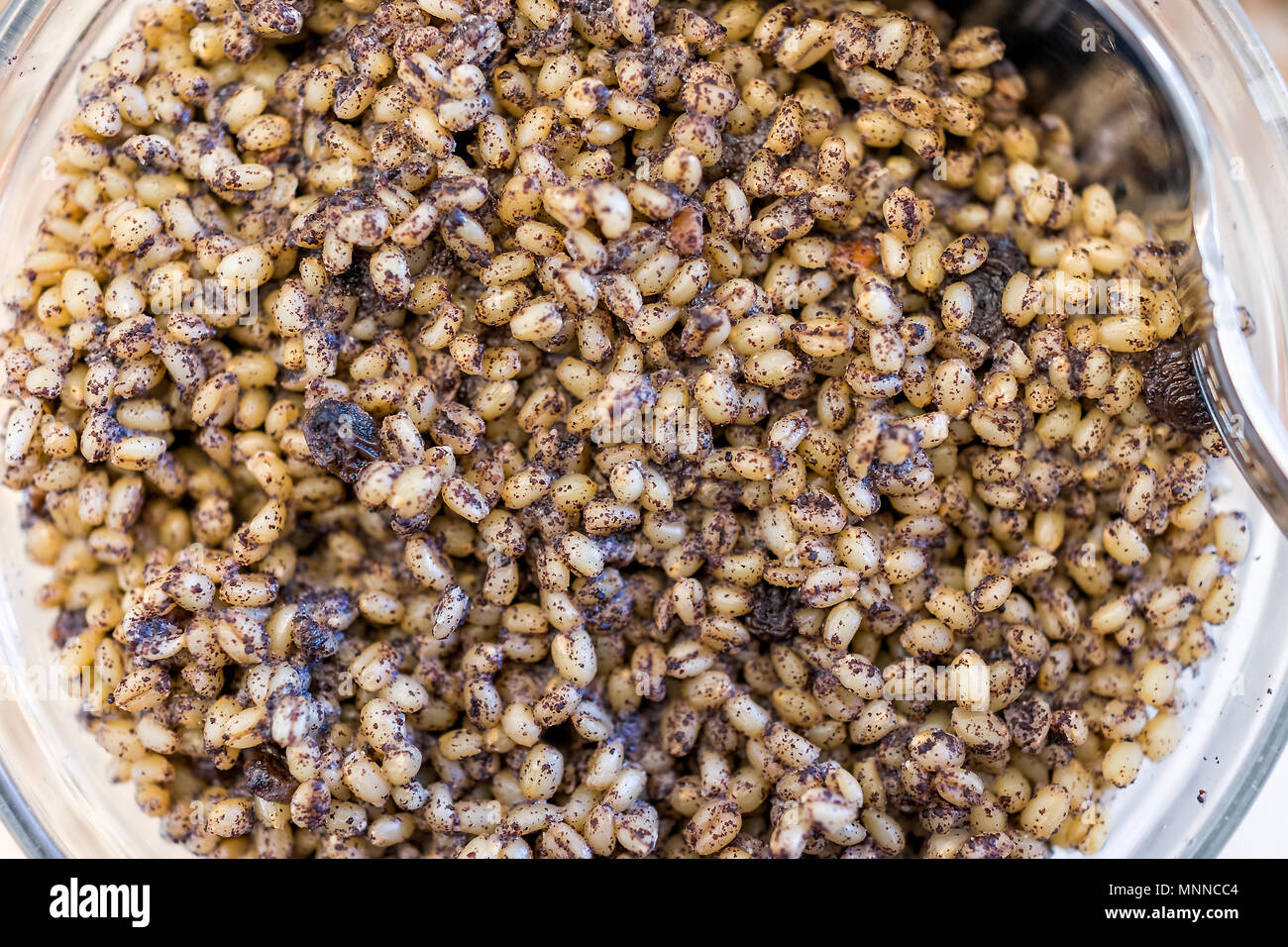 Kutya or kutia cereal dish, macro closeup, Russia and Ukraine Christmas Eve traditional meal, made from wheat berries, poppy seeds, raisins and honey, - Stock Image