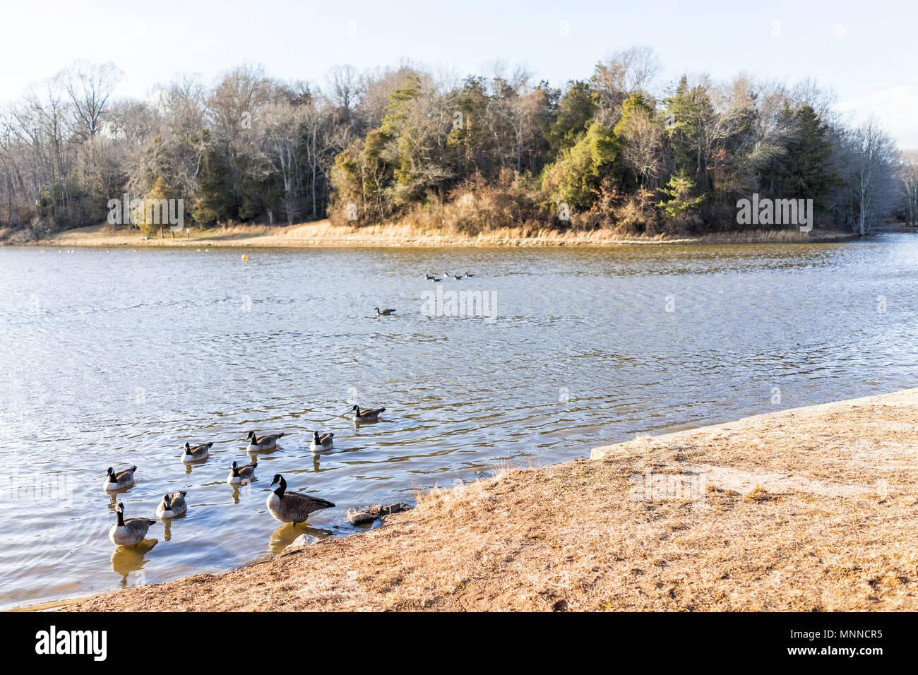 Lake Fairfax Park in winter in Reston, Virginia with flock