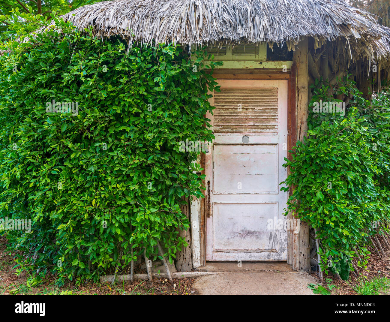 Wooden hut with closed wooden white grunge door surrounded by dense green plants at Montaza public park, Alexandria, Egypt - Stock Image