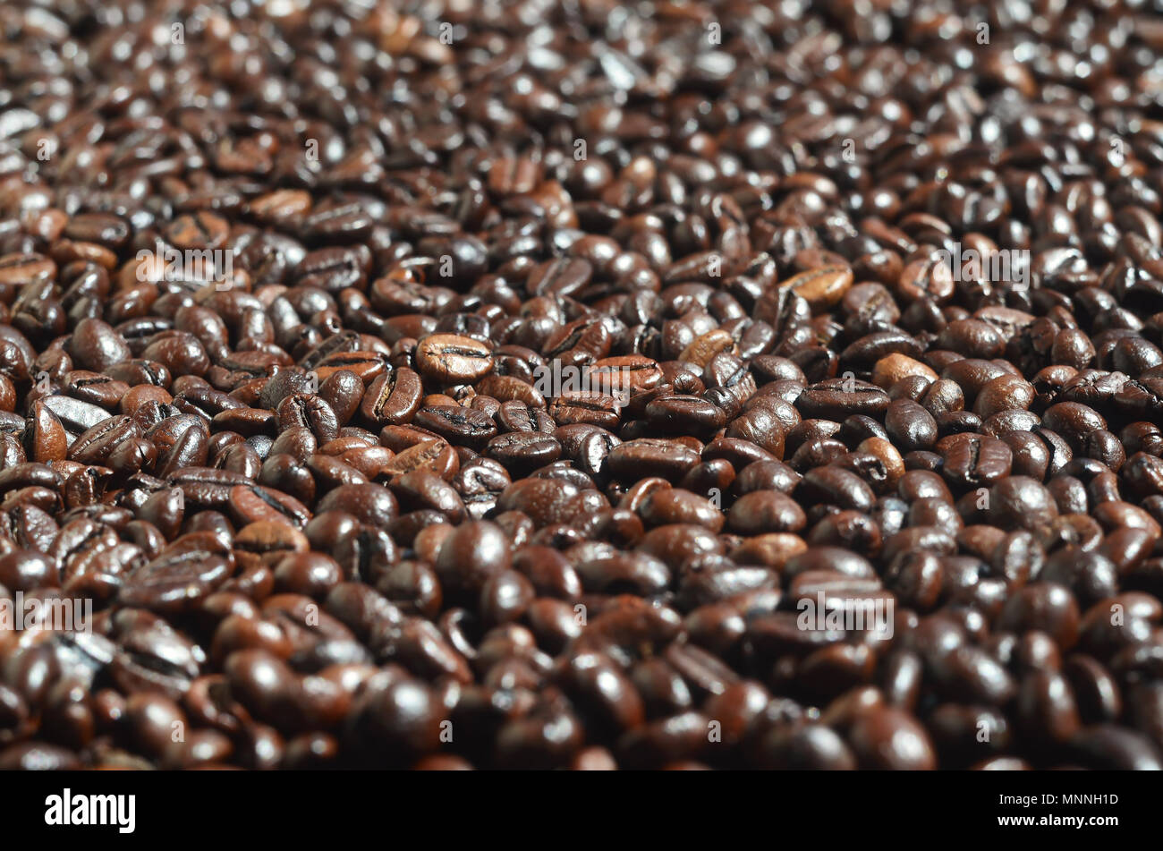 Background pattern from a huge number of fragrant and fresh roasted brown coffee beans. Many grains of coffee crop close-up in warm tones - Stock Image