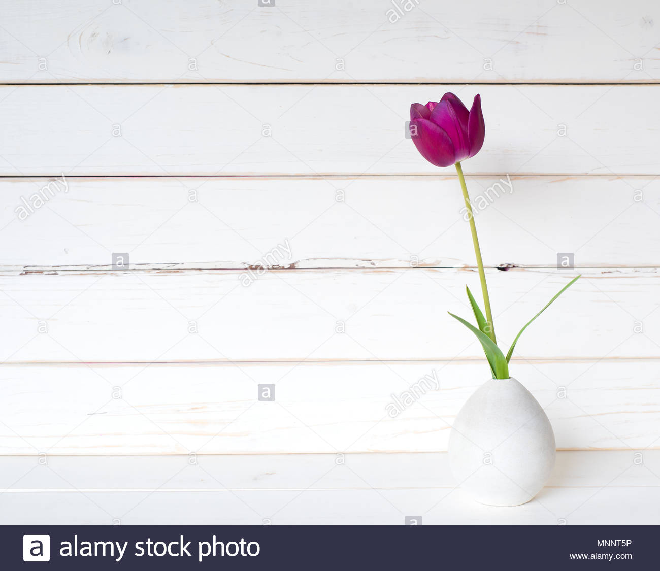One Purple Spring Tulip In A Small Modern Light Gray Vase On White Table And Against Distressed Shiplap Wood Board Background With Extra Room Or Spa