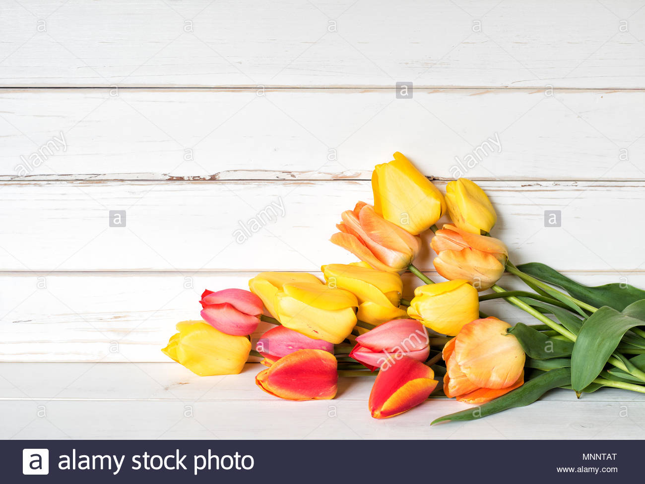 Colorful Spring Tulip Flowers In Yellow Red Orange Colors In A