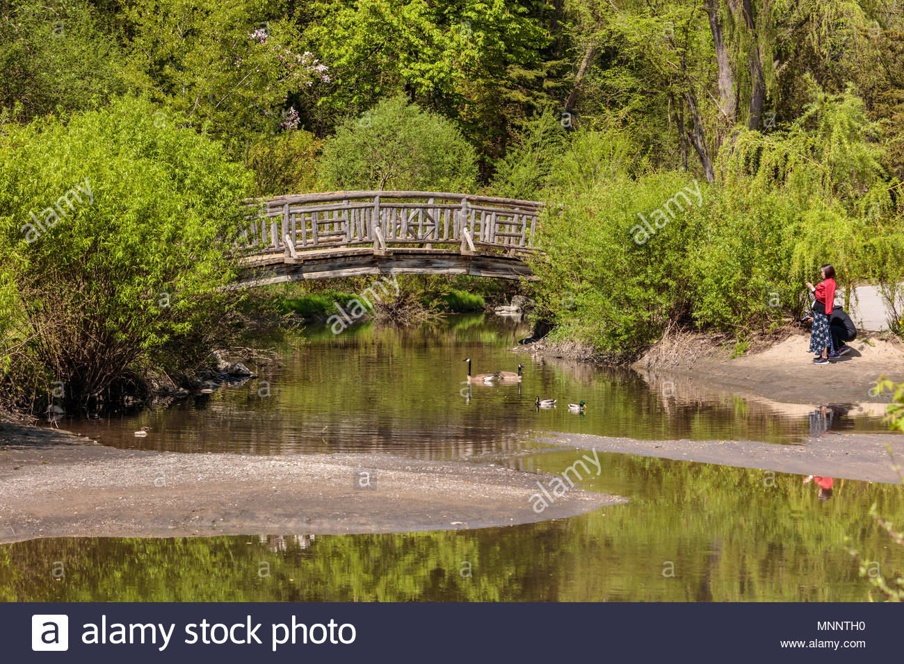 Wooden arch bridge across Wilkett Creek in Edwards Gardens a park in ...