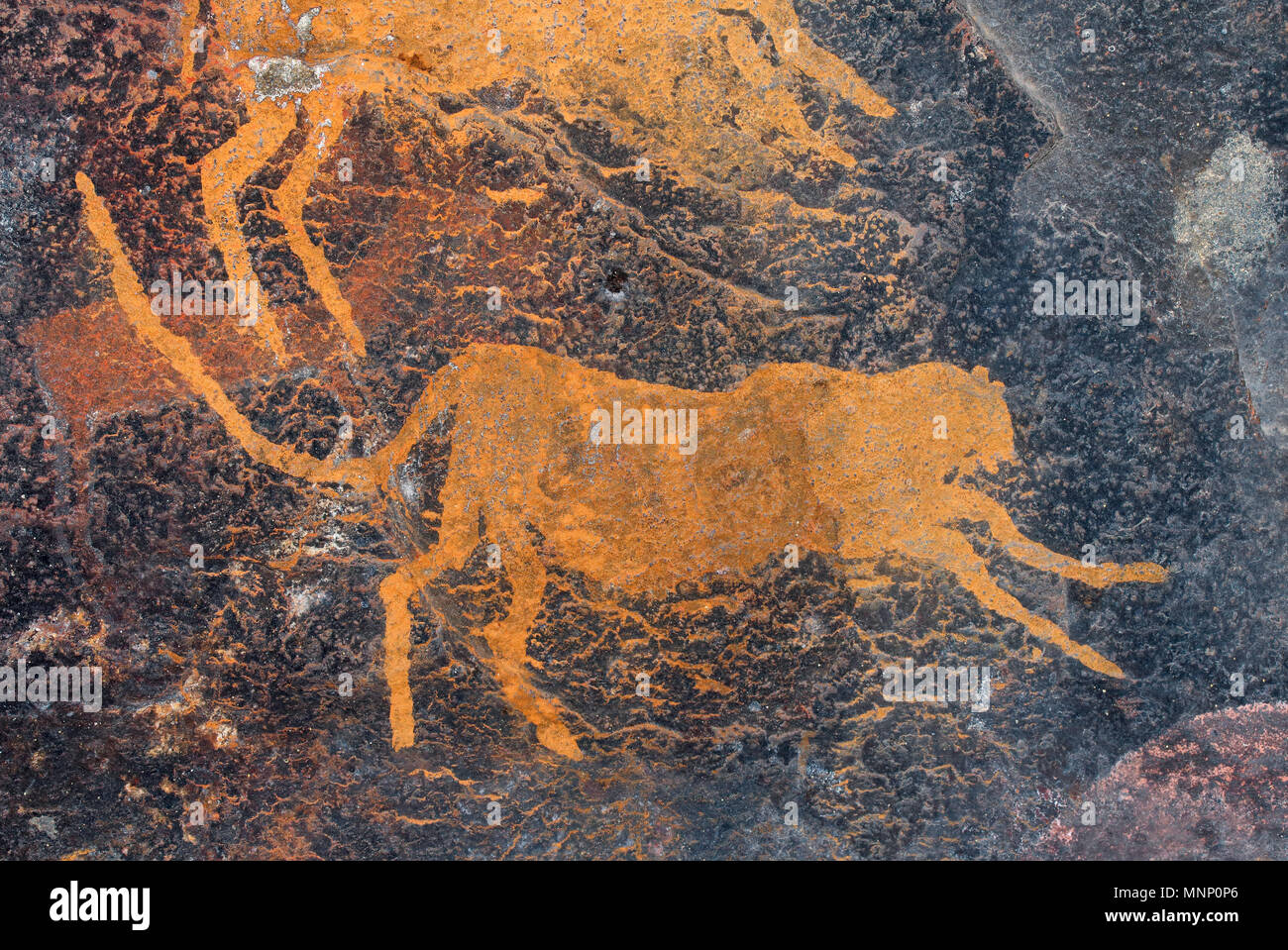 Bushmen (san) rock painting of a cheetah, South Africa Stock Photo