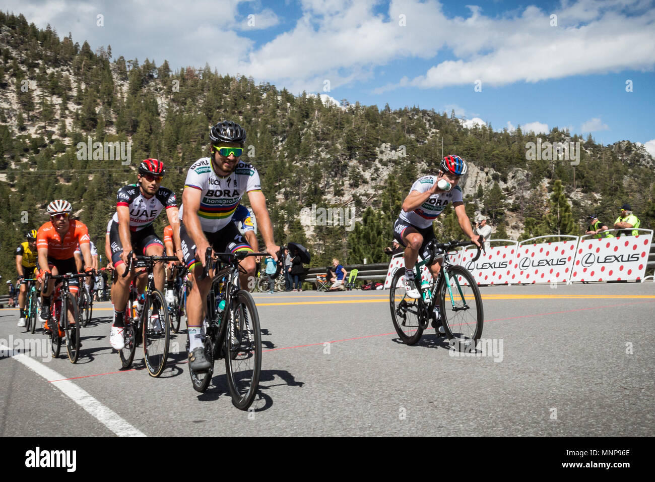 Nevada, USA. 18th May, 2018. PETER SAGAN (SVK), team BORA - hansgrohe (GER), leads a small group of riders at Daggett Summitt, 7334 ft, along Kingsbury Grade Rd., Nevada, near South Lake Tahoe during the Men's Stage 6 of the Amgen Tour of California, on Friday, May 18, 2018. Credit: Tracy Barbutes/ZUMA Wire/Alamy Live News - Stock Image