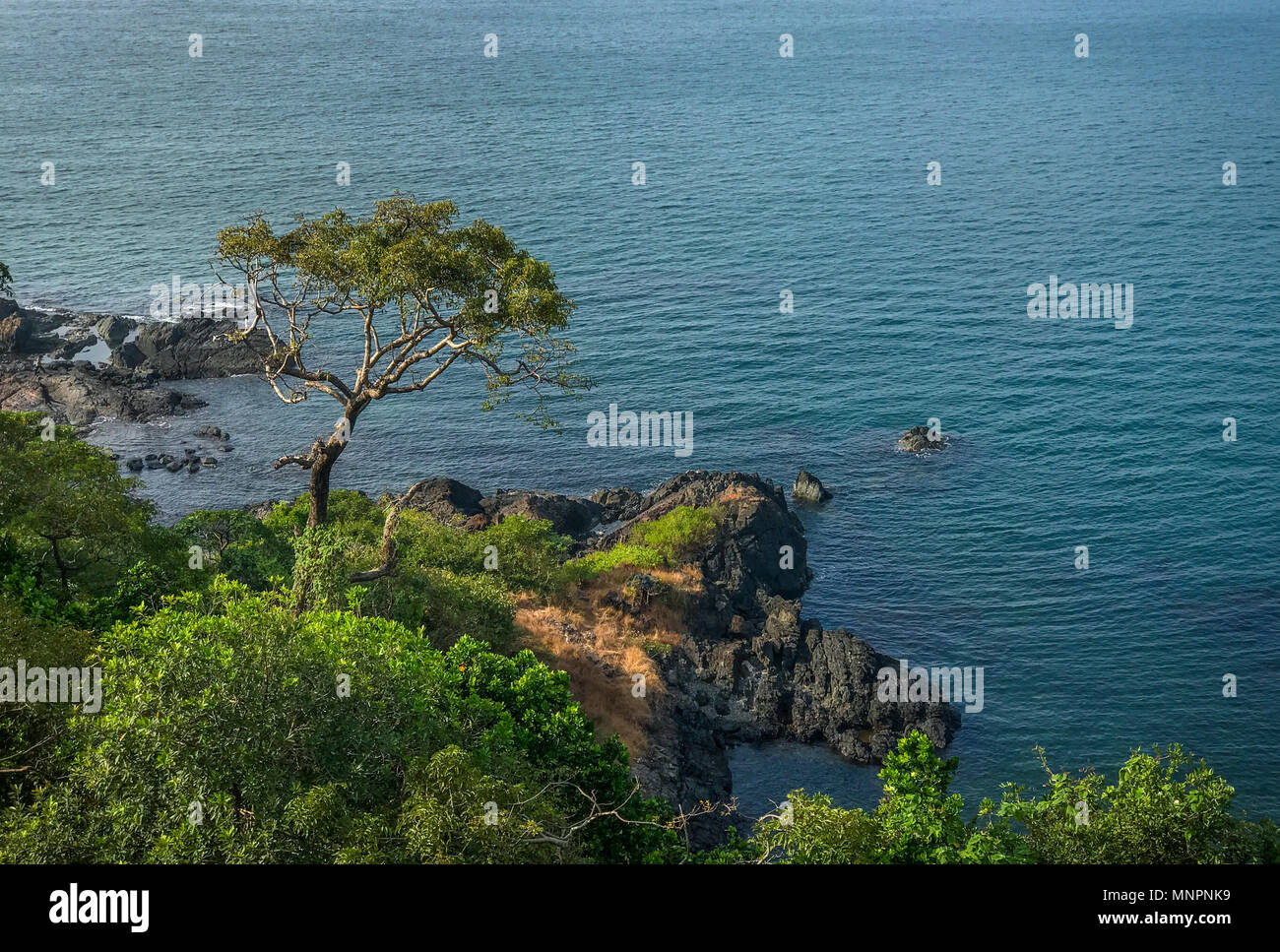 Beautiful view from Cabo de Rama fort. A tree standing tall on the rocks. - Stock Image