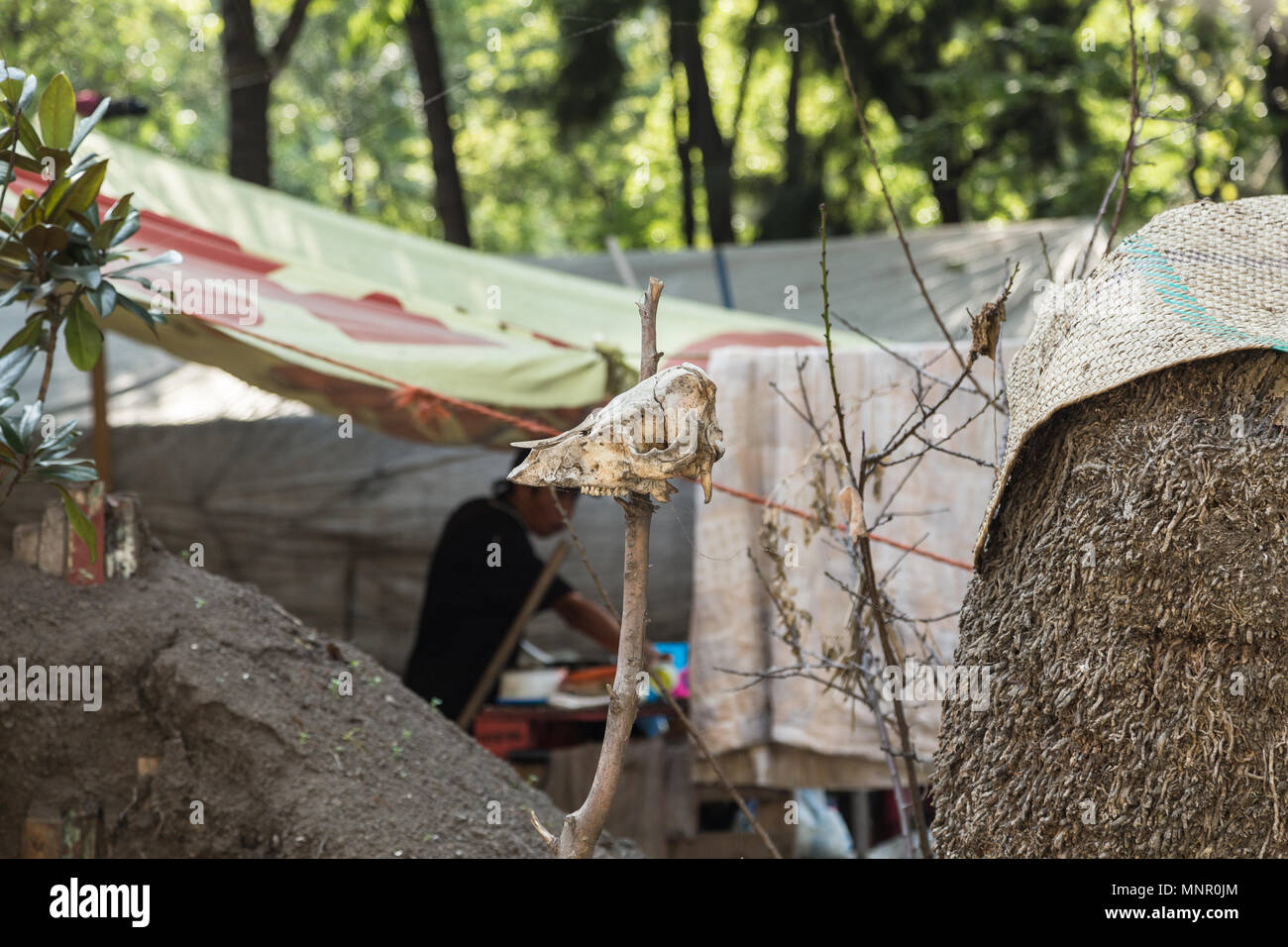 Iguala missing students case activist camp site with an animal skull being staked on the dirt mound on the front, Mexico City, Mexico. - Stock Image