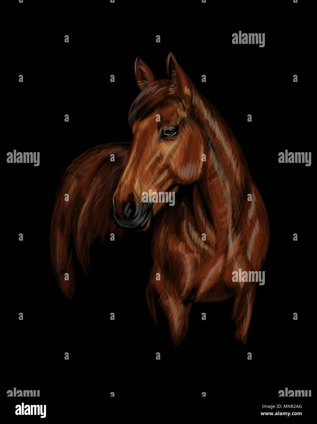 Portrait of the horse on the black background - Stock Vector