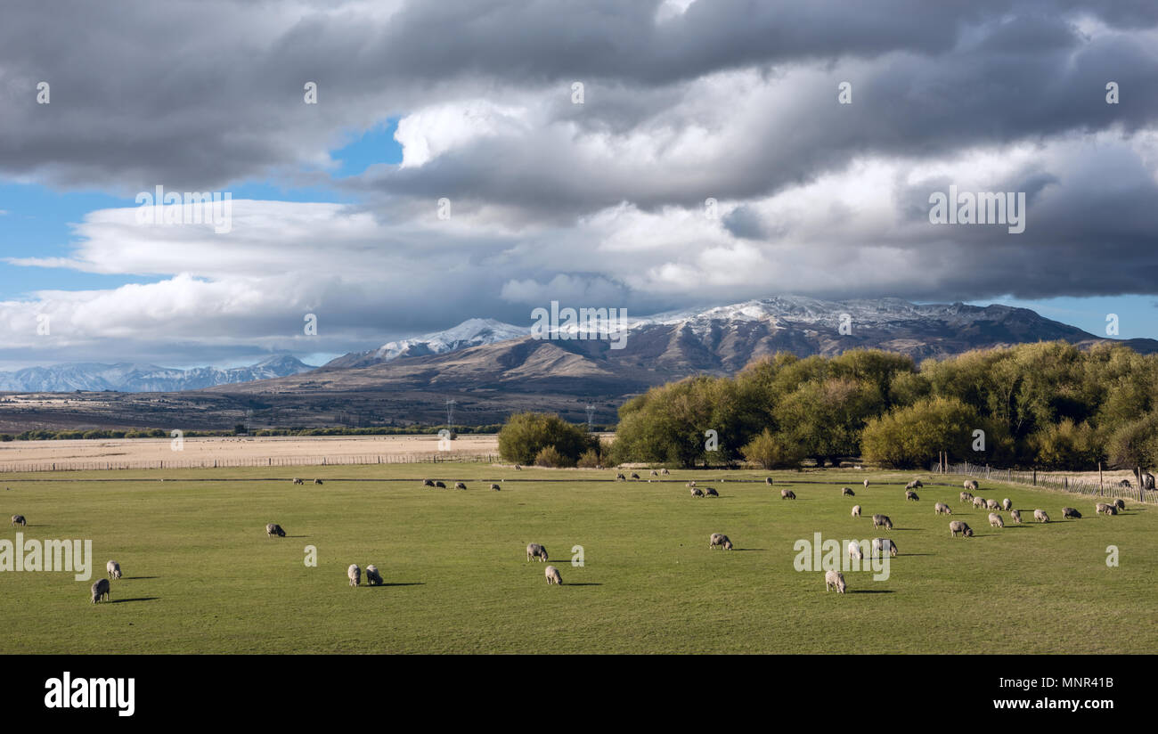 Idyllic Patagonian landscape with lambs. Trevelin-Esquel in the northwest of Chubut Province in Argentine Patagonia - Stock Image