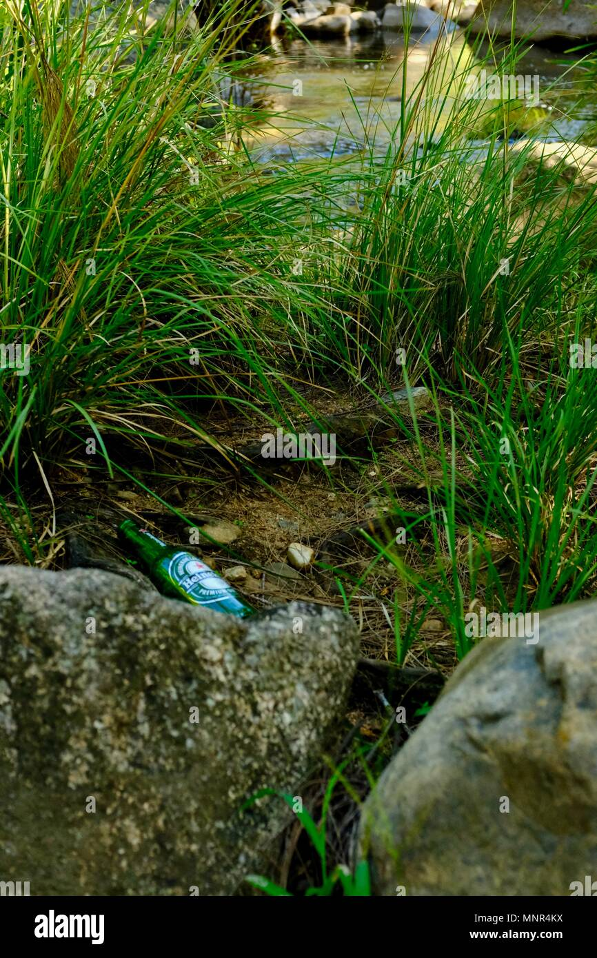 Beer bottle rubbish left behind in a national park, Jourama Falls, Bruce Hwy, Yuruga QLD, Australia - Stock Image