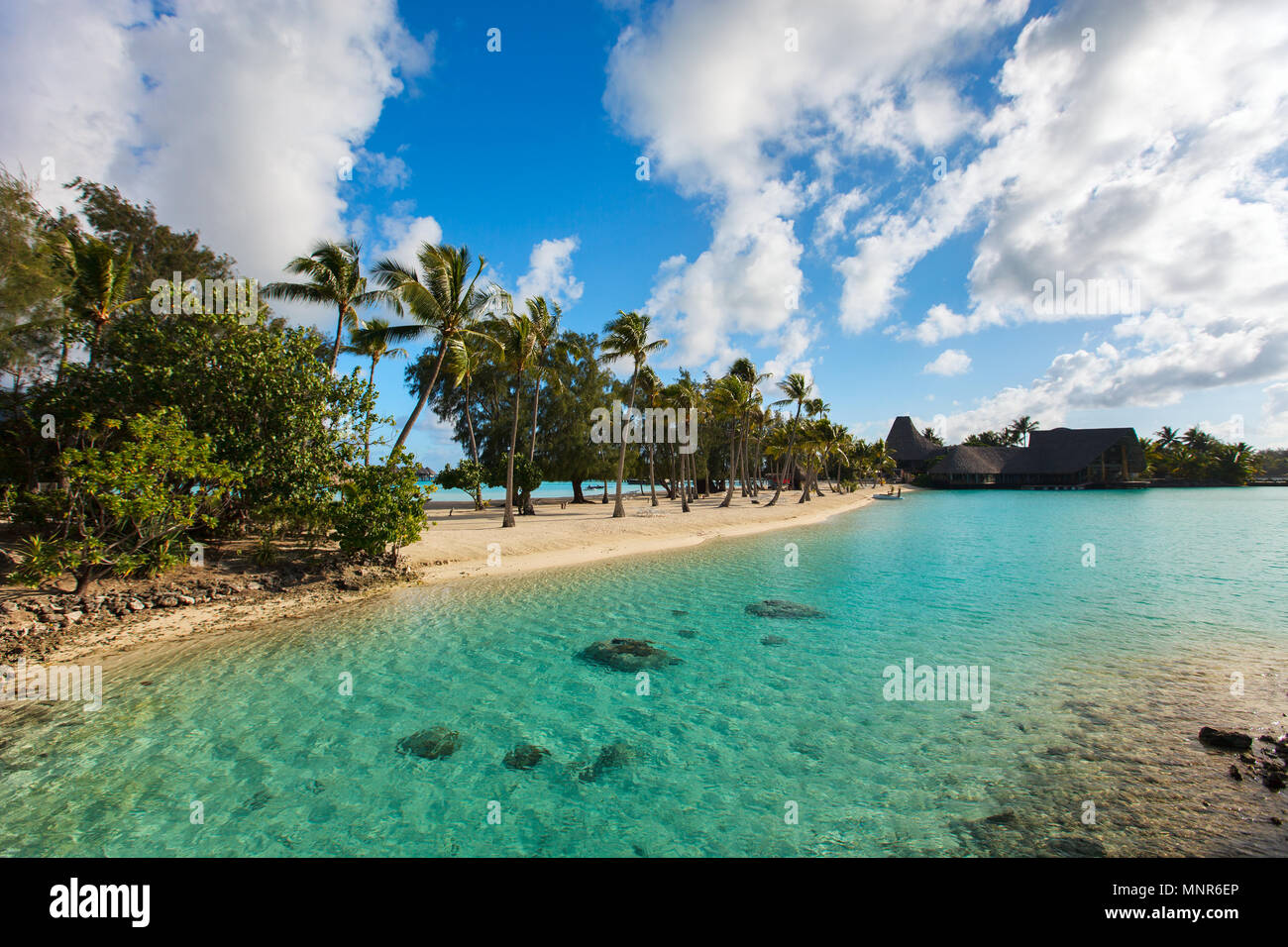 Beautiful beach with coconut palms on Bora Bora island in French Polynesia - Stock Image