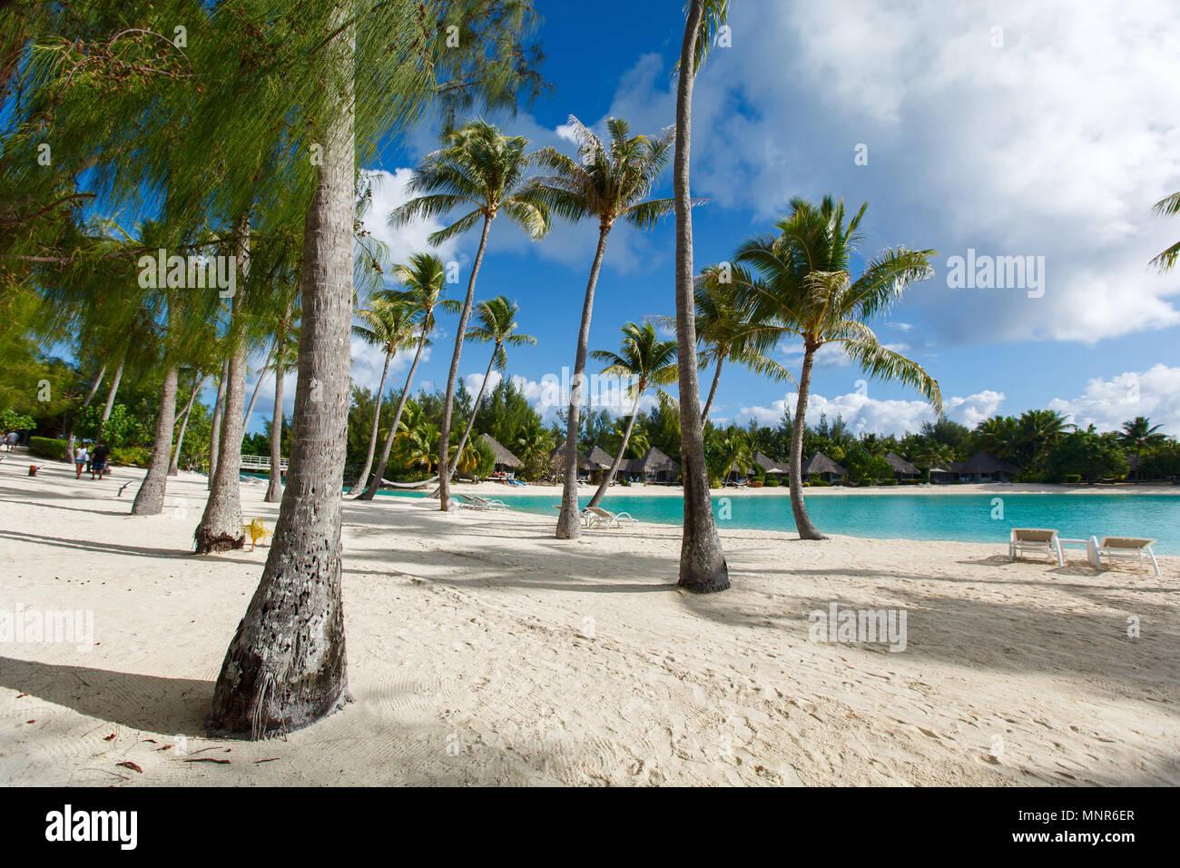 Beautiful beach with coconut palms on Bora Bora island in French Polynesia - Stock Image