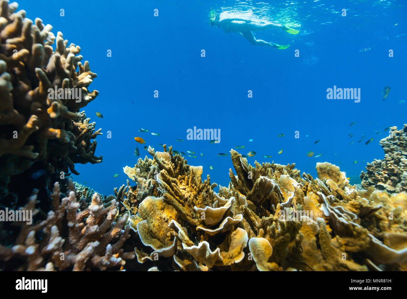 Beautiful Colorful Coral Reef And Tropical Fish Underwater In Palau