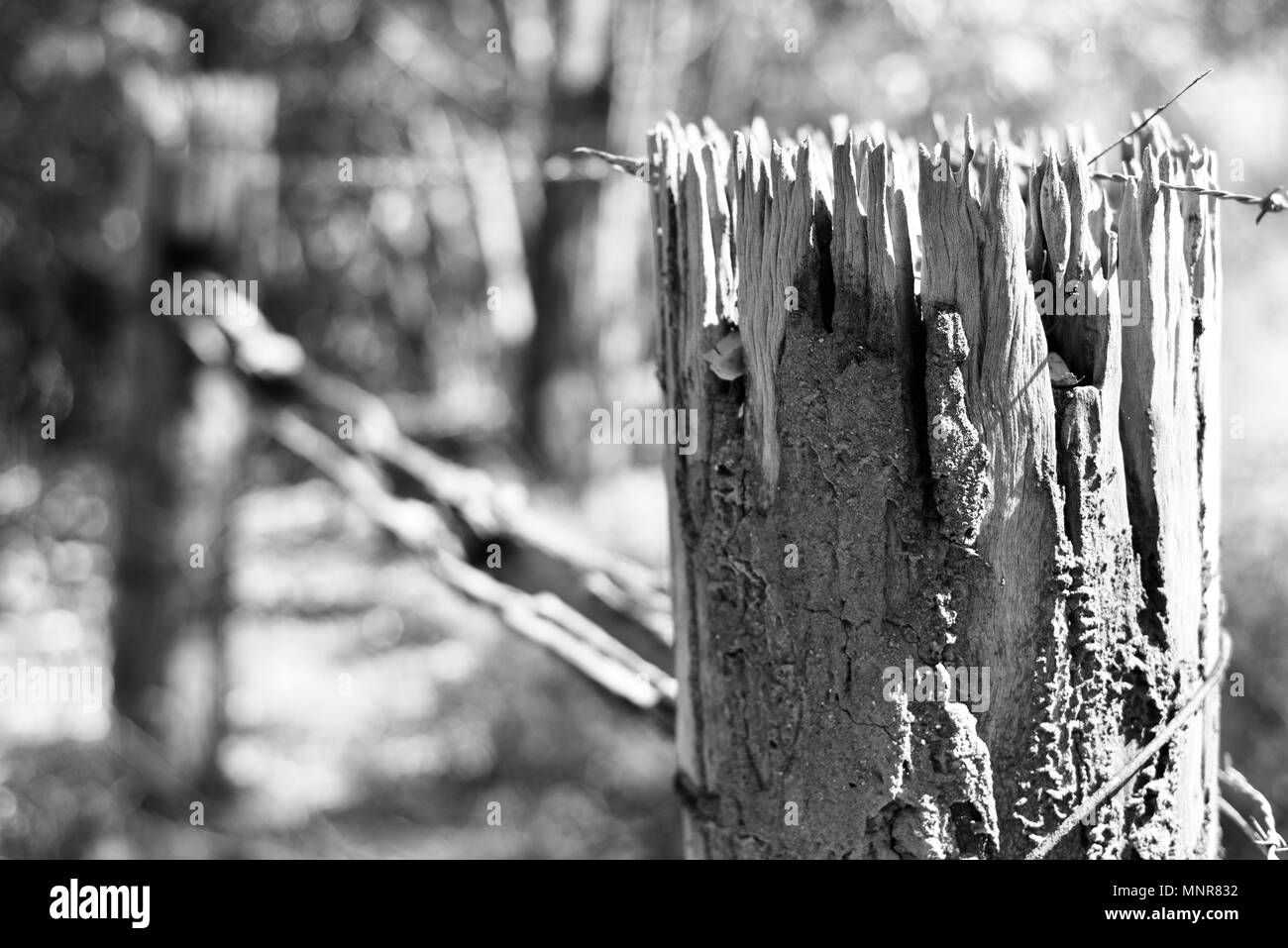 An old decayed and termite eaten fence post in black and white, Rollingstone QLD, Australia - Stock Image