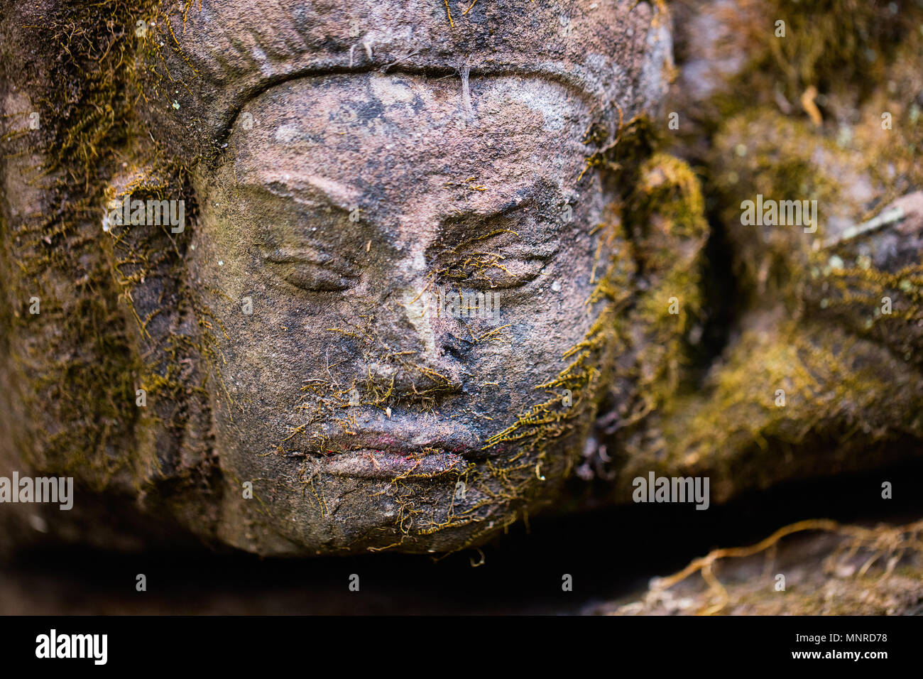 Mossy stone face in Angkor Archaeological area in Cambodia - Stock Image