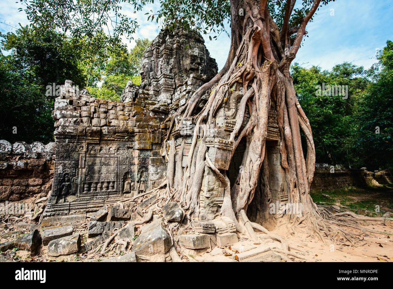 Ta Som jungle temple in Angkor Archeological area in Cambodia - Stock Image