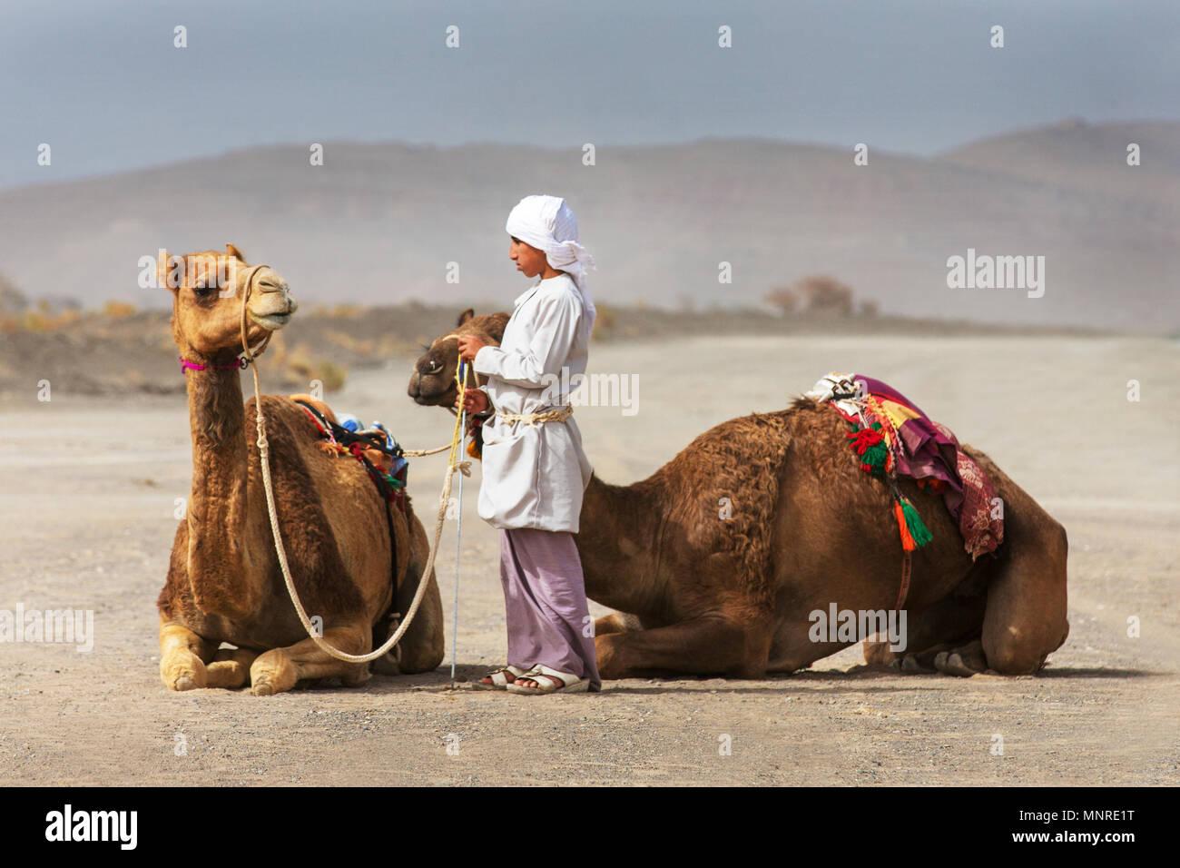 Fantastic Oman Eid Al-Fitr 2018 - al-safen-oman-27th-april-2018-bedouin-boy-with-his-camels-in-omani-countryside-MNRE1T  Pic_272640 .jpg