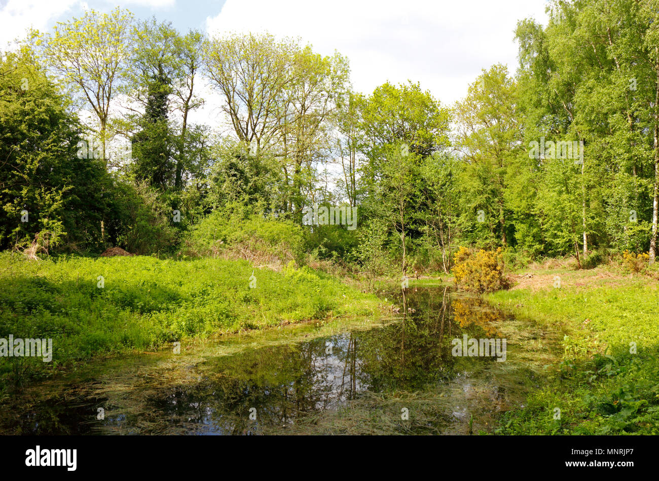 A view of Alderford Common Site of Special Scientific Interest and nature reserve at Alderford, Norfolk, England, United Kingdom, Europe. - Stock Image