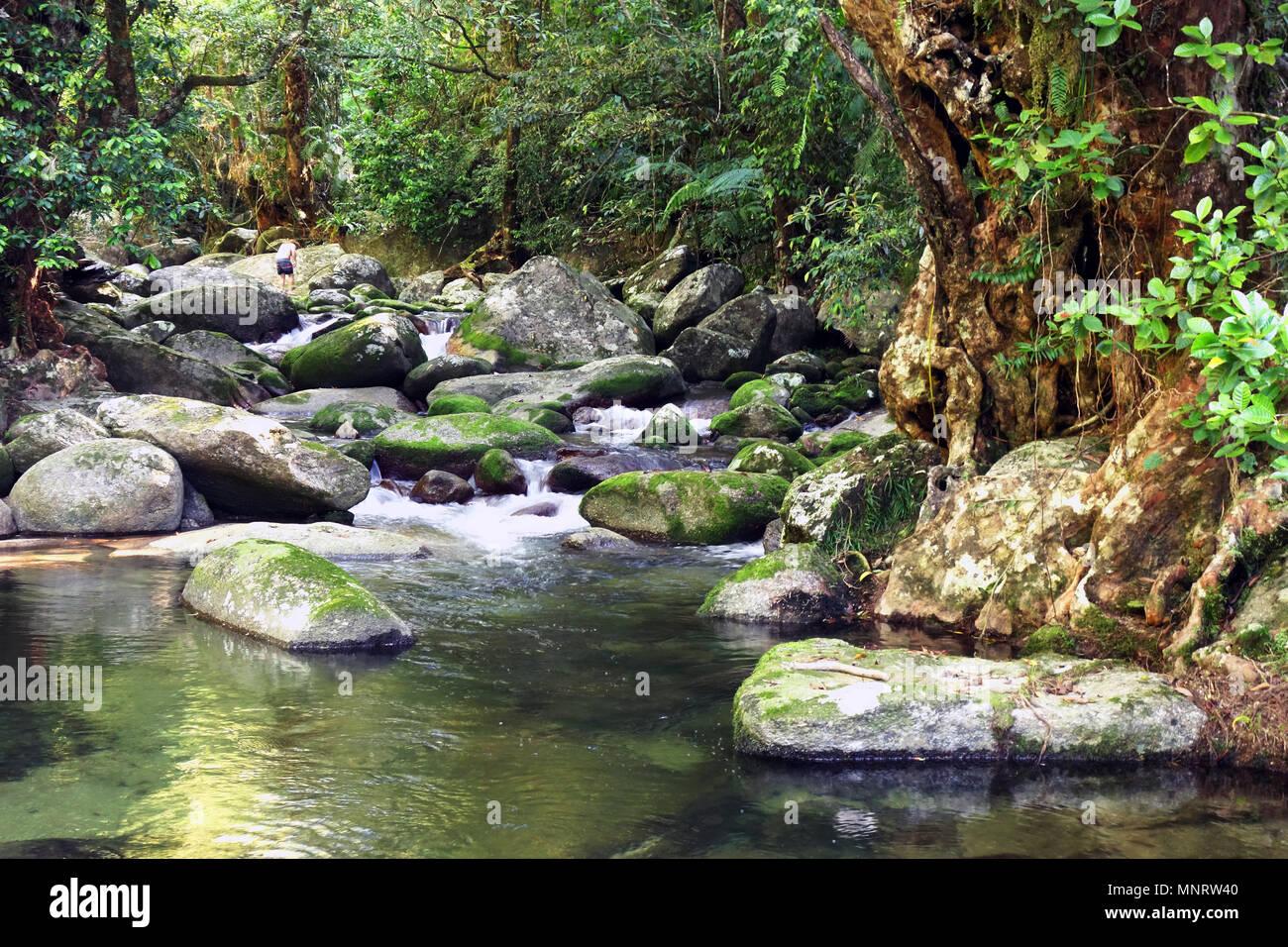 Frenchman's Creek, Mt Bellenden Ker, near Cairns, Queensland, Australia - Stock Image