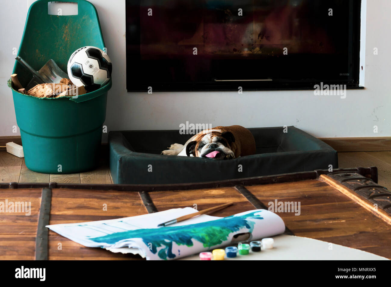 English bulldog sleeping in front of fireplace and coffee table with children's drawings, retro and modern style combination, landscape orientation. - Stock Image