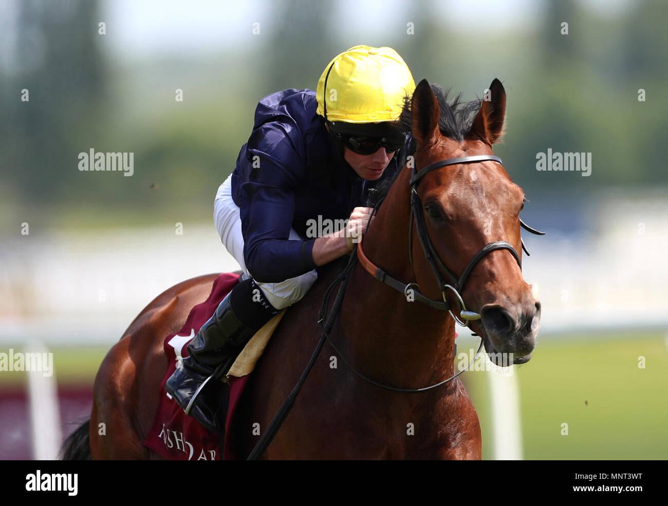 Crystal Ocean ridden by Ryan Moore wins the Al Rayyan Stakes during the Al Shaqab Lockinge Day at Newbury Racecourse. Stock Photo
