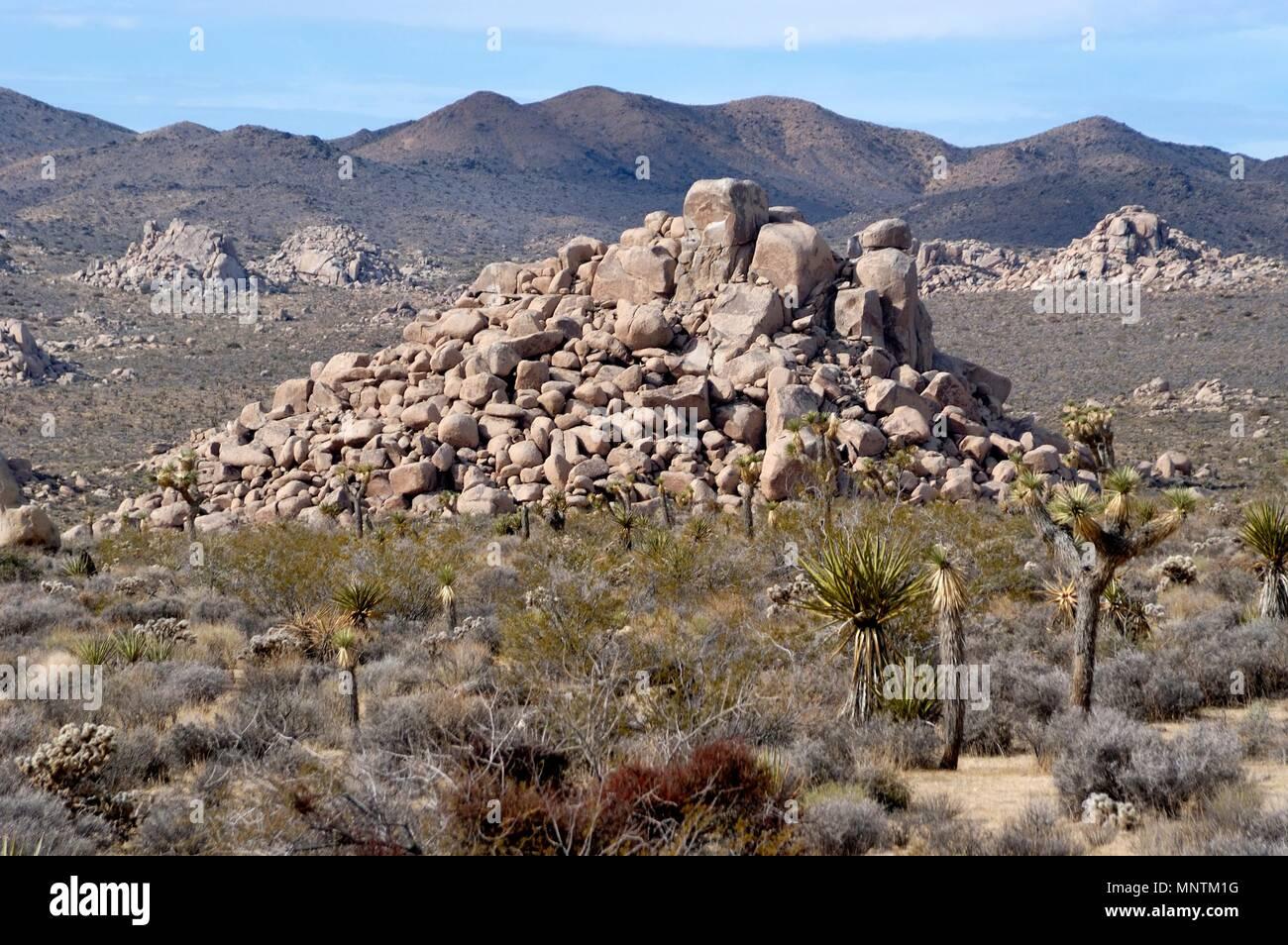 Monzogranite rock pile, Joshua tree, Yucca brevifolia, Yucca palm, Mojave Yucca, Yucca shidigera,  Mojave Desert, Geology Tour Road, 031129_0435 - Stock Image