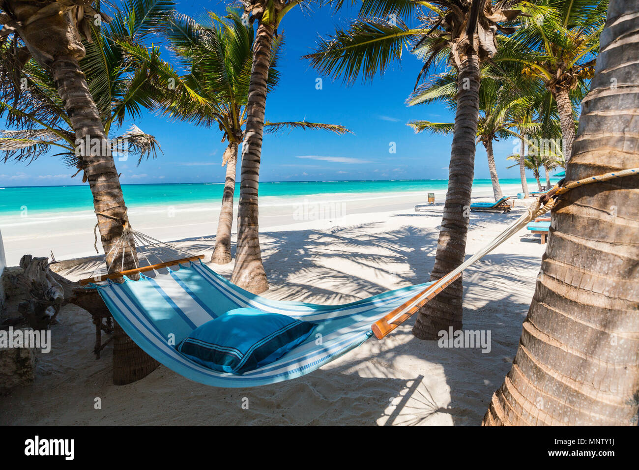 Perfect tropical beach with palm trees and hammock - Stock Image