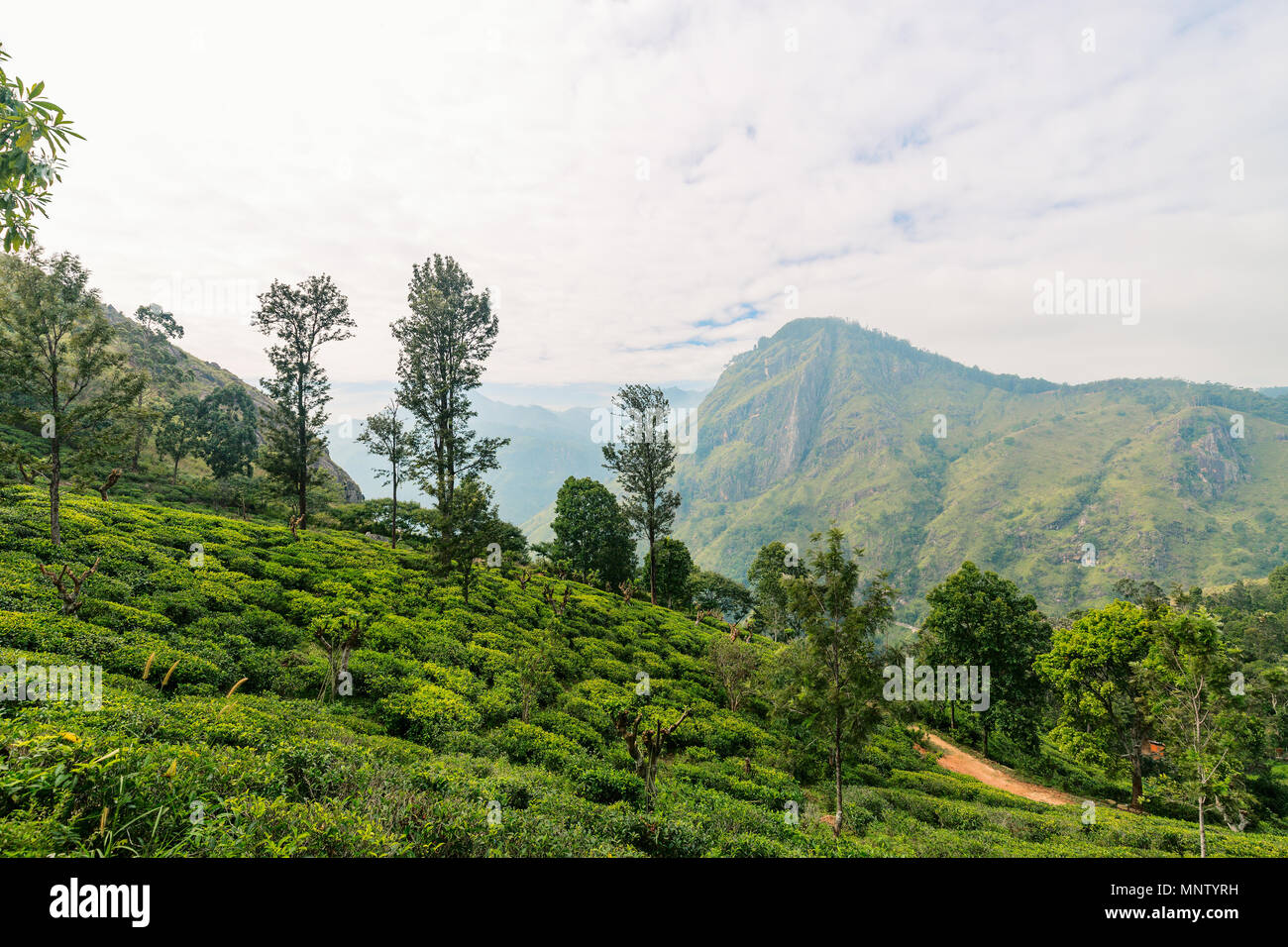 Breathtaking views over mountains and tea plantations from Little Adams peak hiking trail in Ella Sri Lanka Stock Photo