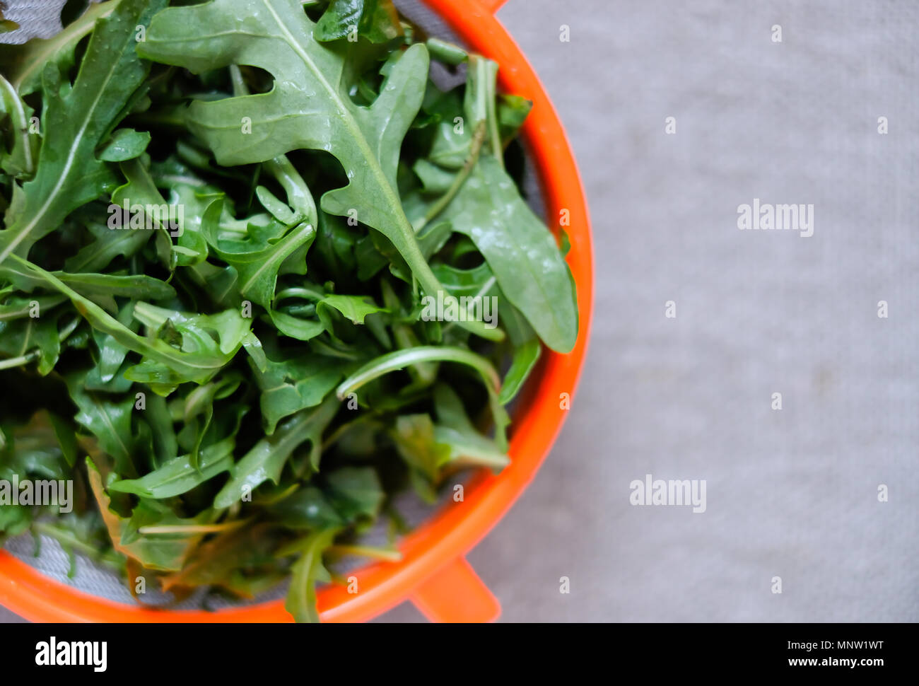 Fresh fragrant arugula in a colander on a neutral light background. Wash greens before eating or cooking. Closeup view. - Stock Image