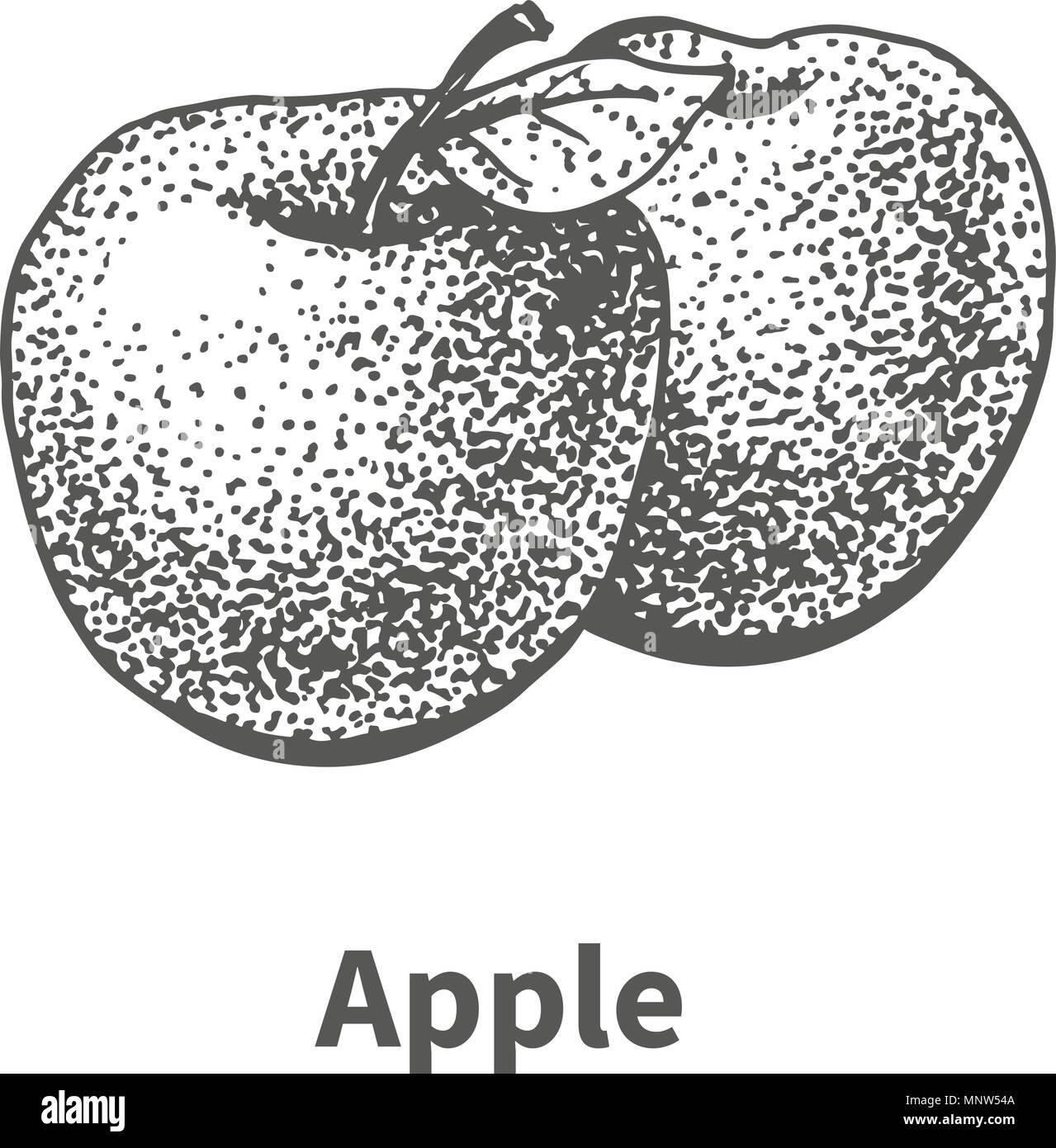 Vector illustration hand-drawn apple - Stock Image